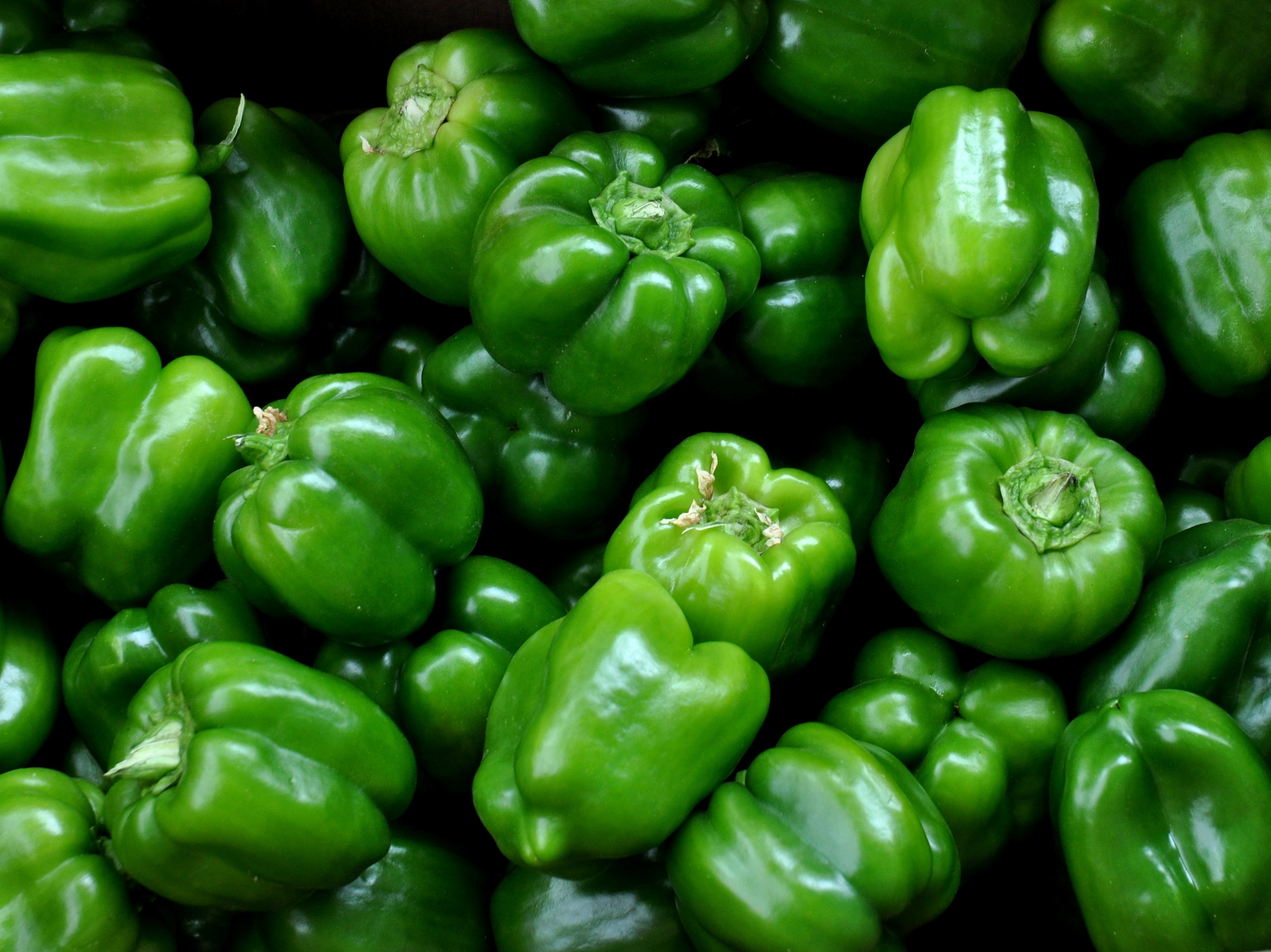 Green bell peppers from Lyall Farms. Photo copyright 2013 by Zachary D. Lyons.