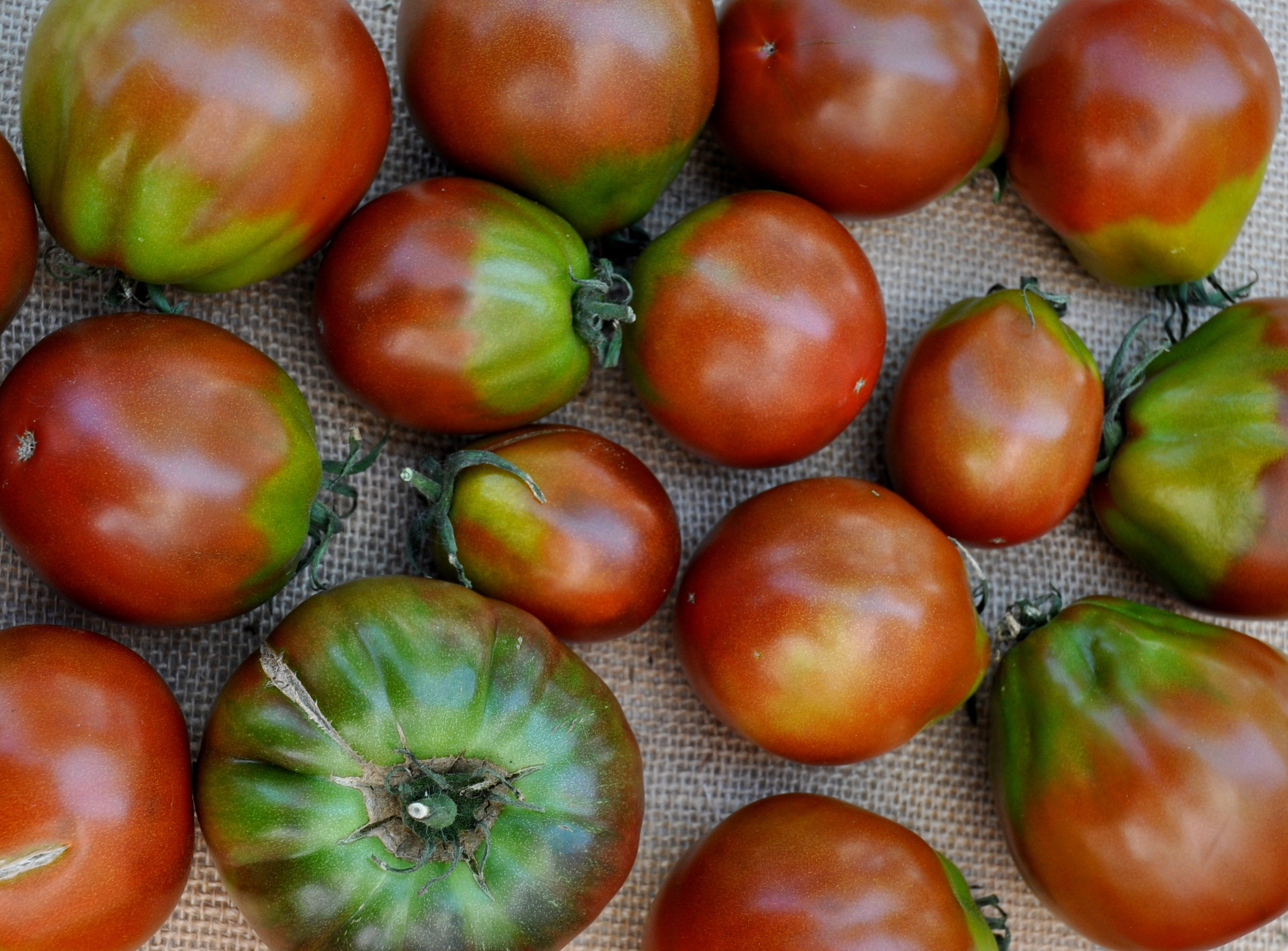 Japanese Black Truffle tomatoes from One Leaf Farm. Photo copyright 2013 by Zachary D. Lyons.