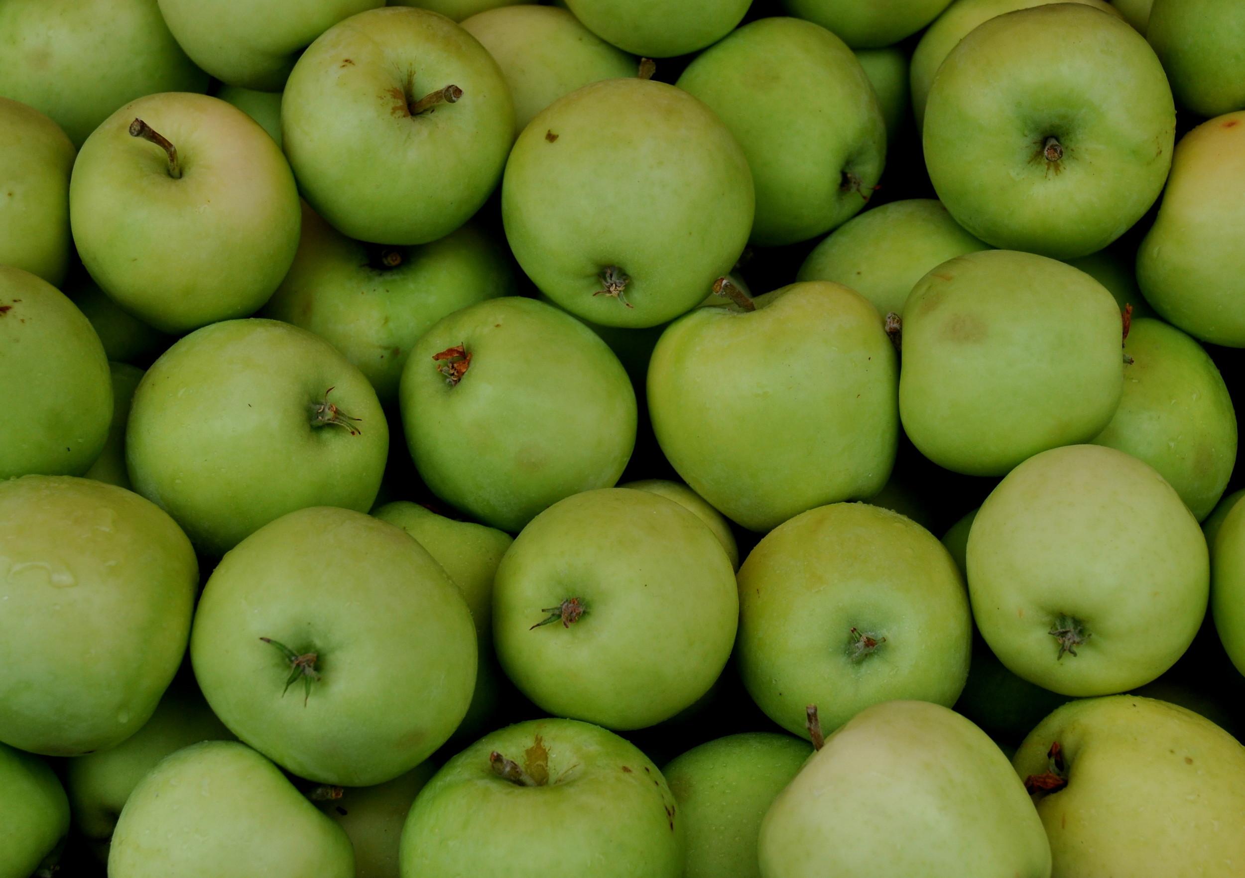 Shamrock apples from Tiny's Organic Produce. Photo copyright 2013 by Zachary D. Lyons.