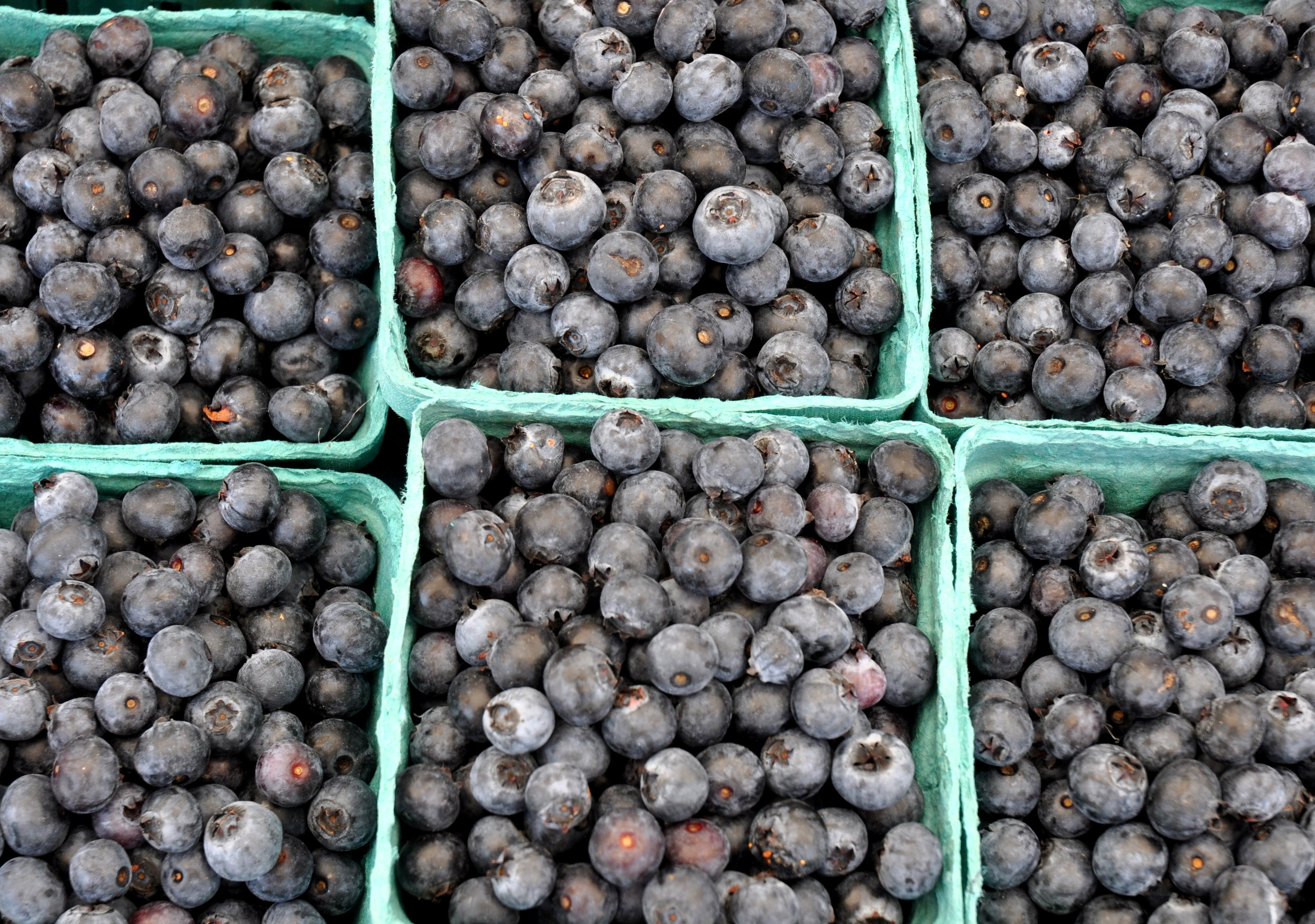 Jerseys blueberries from Whitehorse Meadows Farm. Photo copyright 2013 by Zachary D. Lyons.