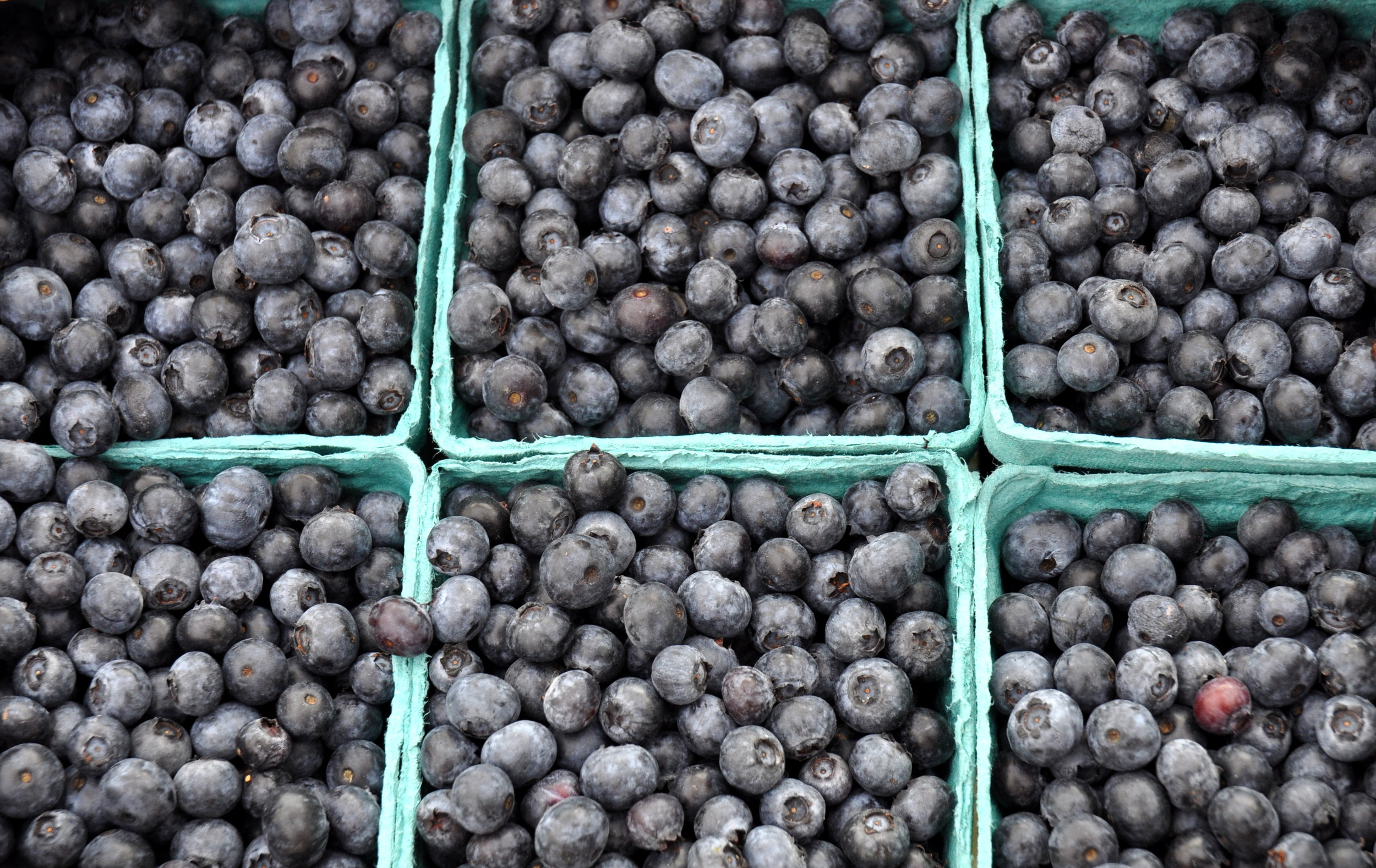 Rubels blueberries from Whitehorse Meadows Farm. Photo copyright 2013 by Zachary D. Lyons.