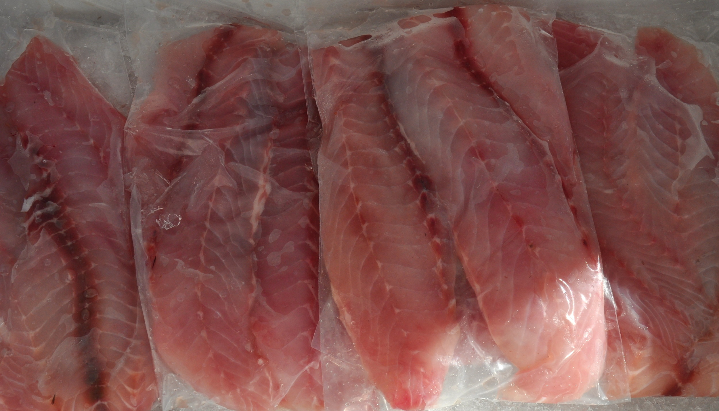 Fresh, local Rockfish from Wilson Fish. Photo copyright 2013 by Zachary D. Lyons.