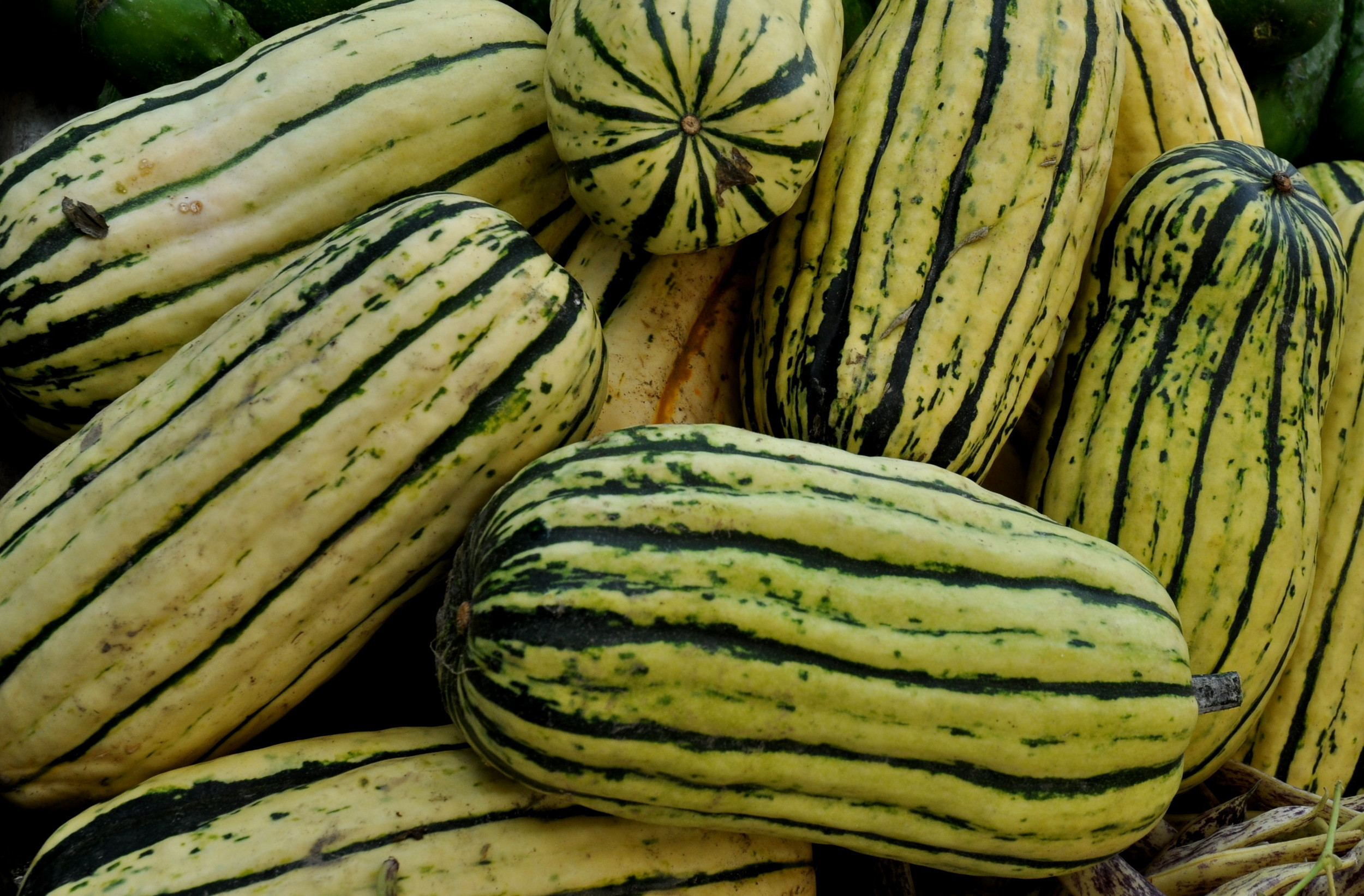 Delicata winter squash from Alm Hill Gardens. Photo copyright 2013 by Zachary D. Lyons.