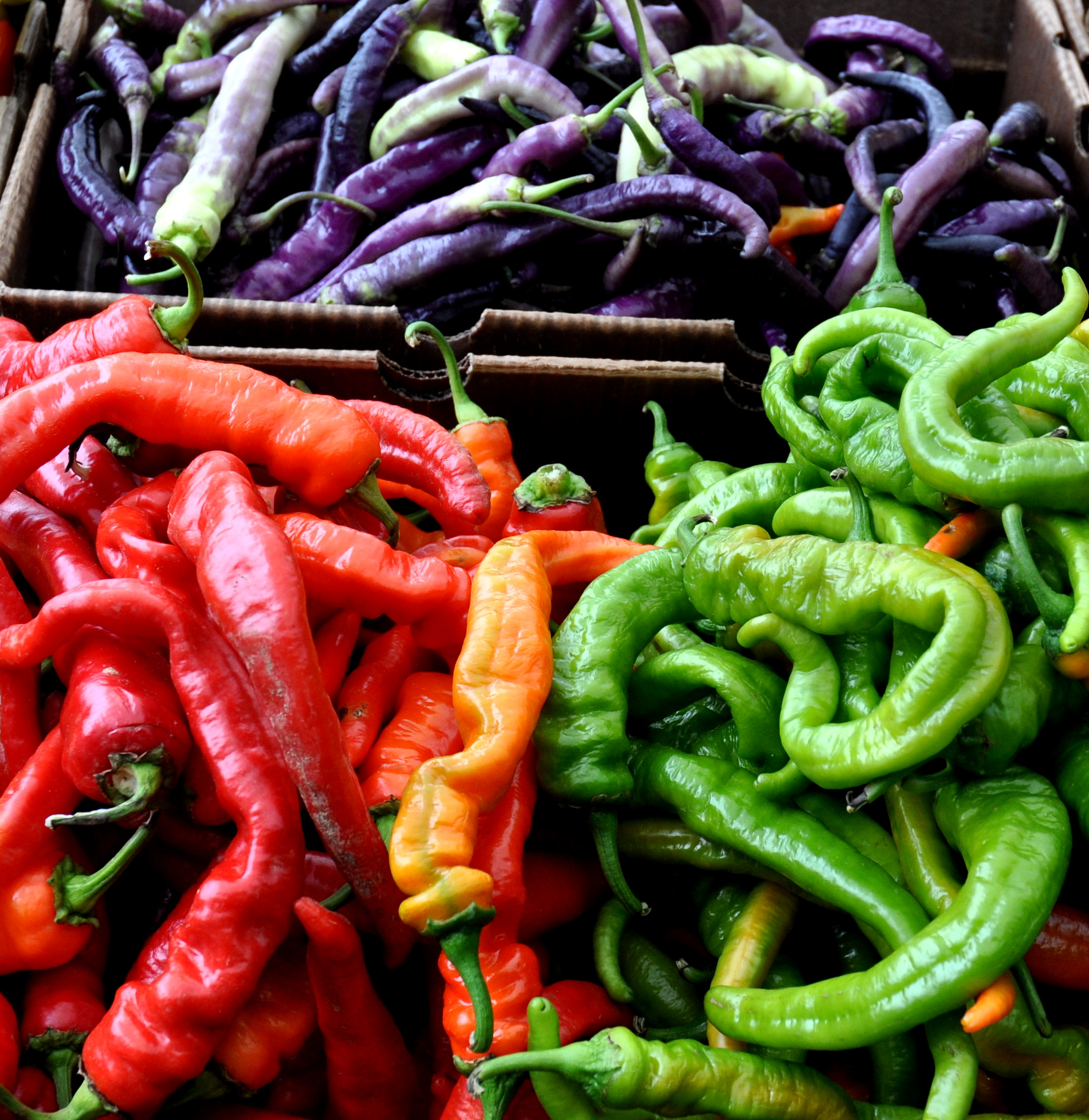 Goathorn chile peppers from Alvarez Organic Farms. Photo copyright 2013 by Zachary D. Lyons.