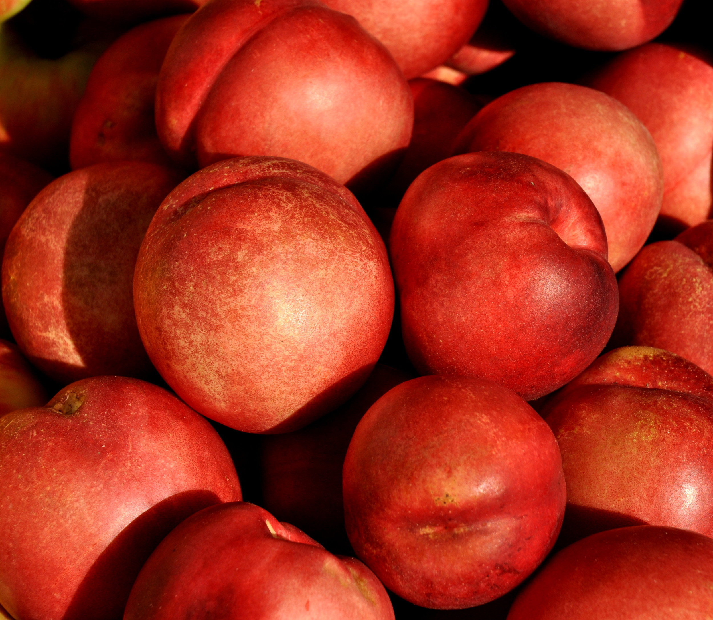 Nectarplums from Collins Family Orchards. Photo copyright 2013 by Zachary D. Lyons.