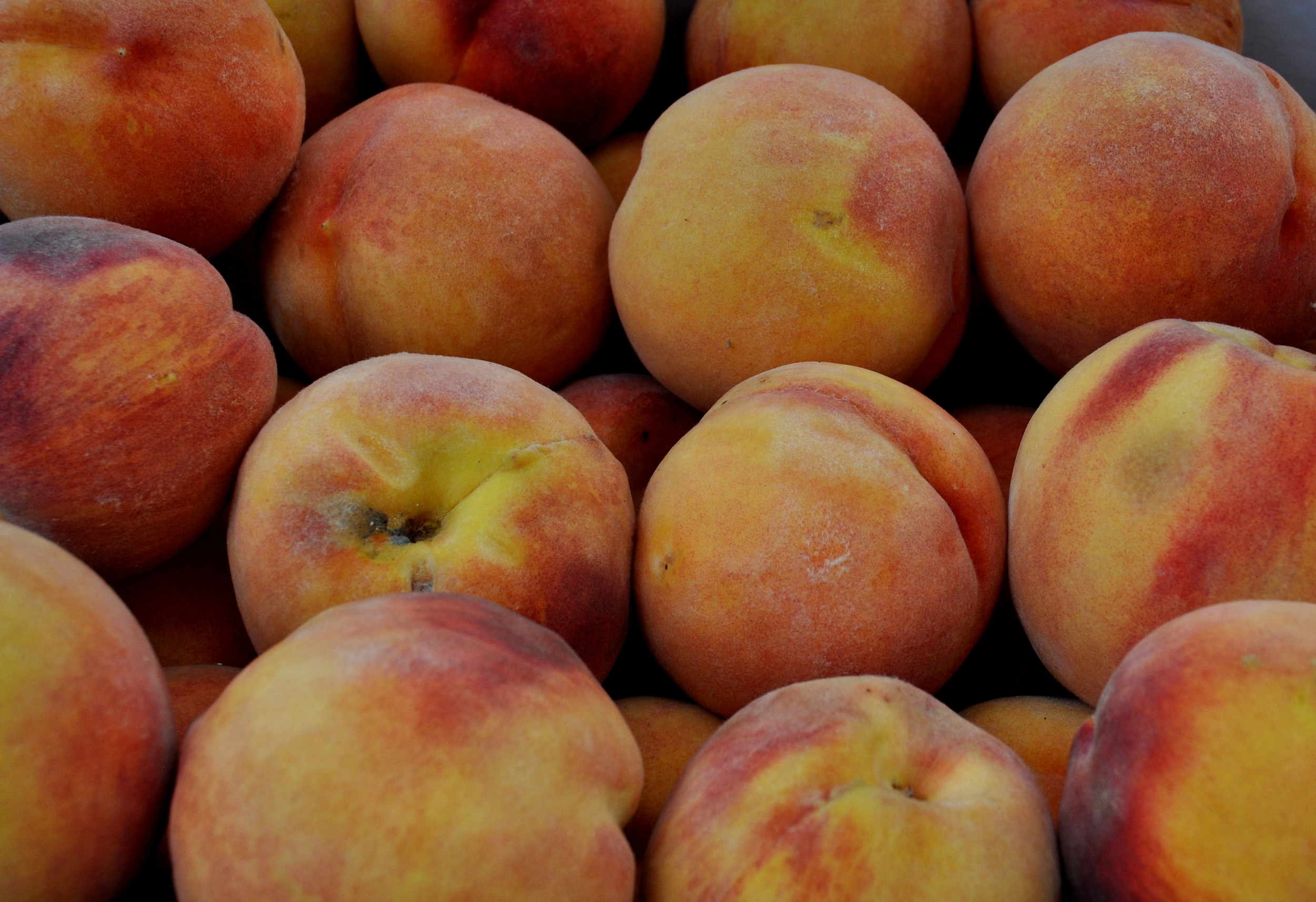 D.H. Hale peaches from Martin Family Orchards. Photo copyright 2013 by Zachary D. Lyons.