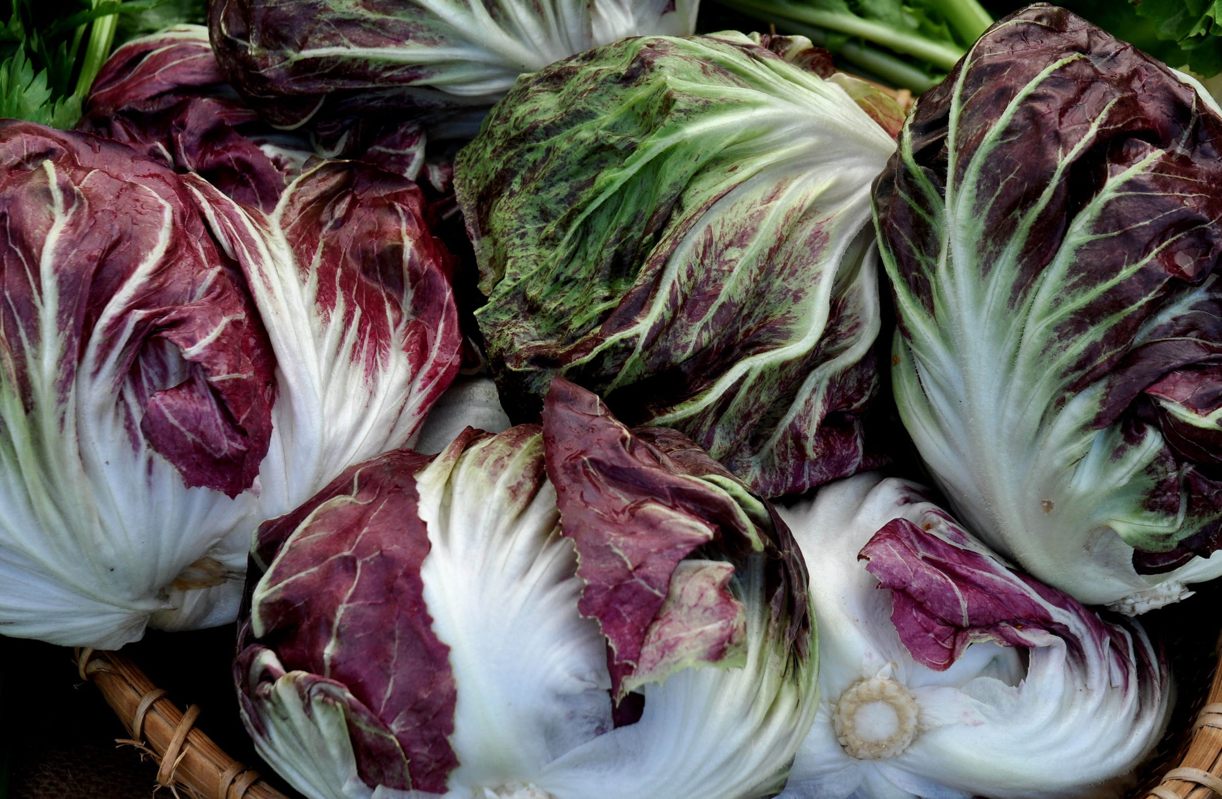 Chioggia radicchio from One Leaf Farm. Photo copyright 2013 by Zachary D. Lyons.