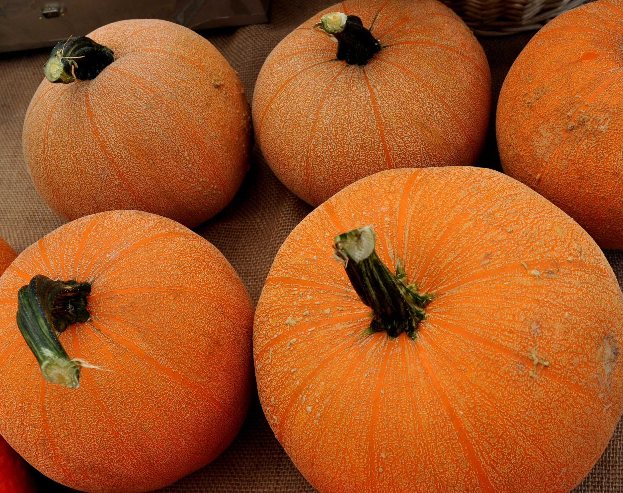 Winter Luxury pumpkins from One Leaf Farm. Photo copyright 2013 by Zachary D. Lyons.