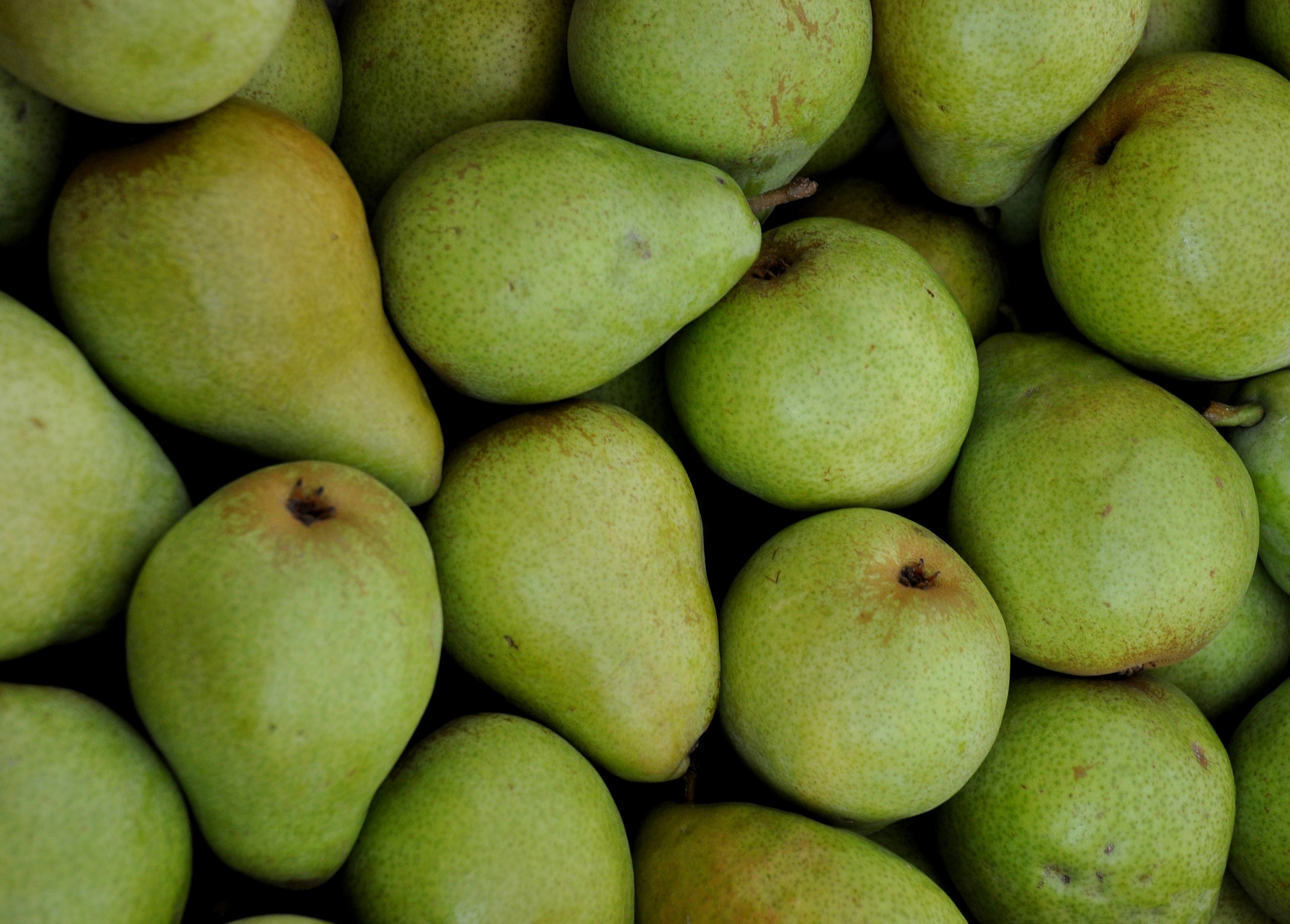 D'Anjou pears from Booth Canyon Orchards at Ballard Farmers Market. Copyright Zachary D. Lyons.