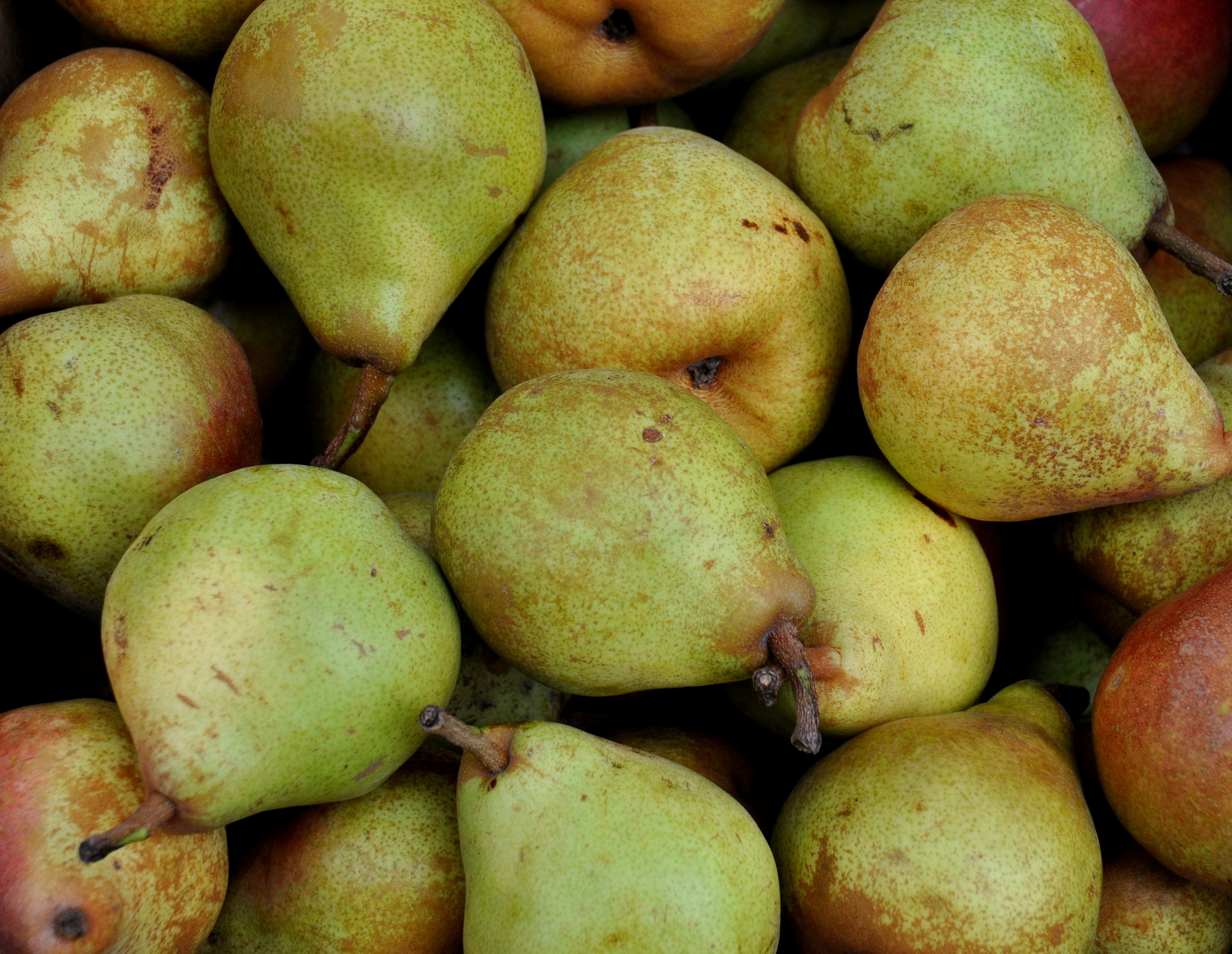 Taylor's Gold pears from Booth Canyon Orchard. Photo copyright 2013 by Zachary D. Lyons.
