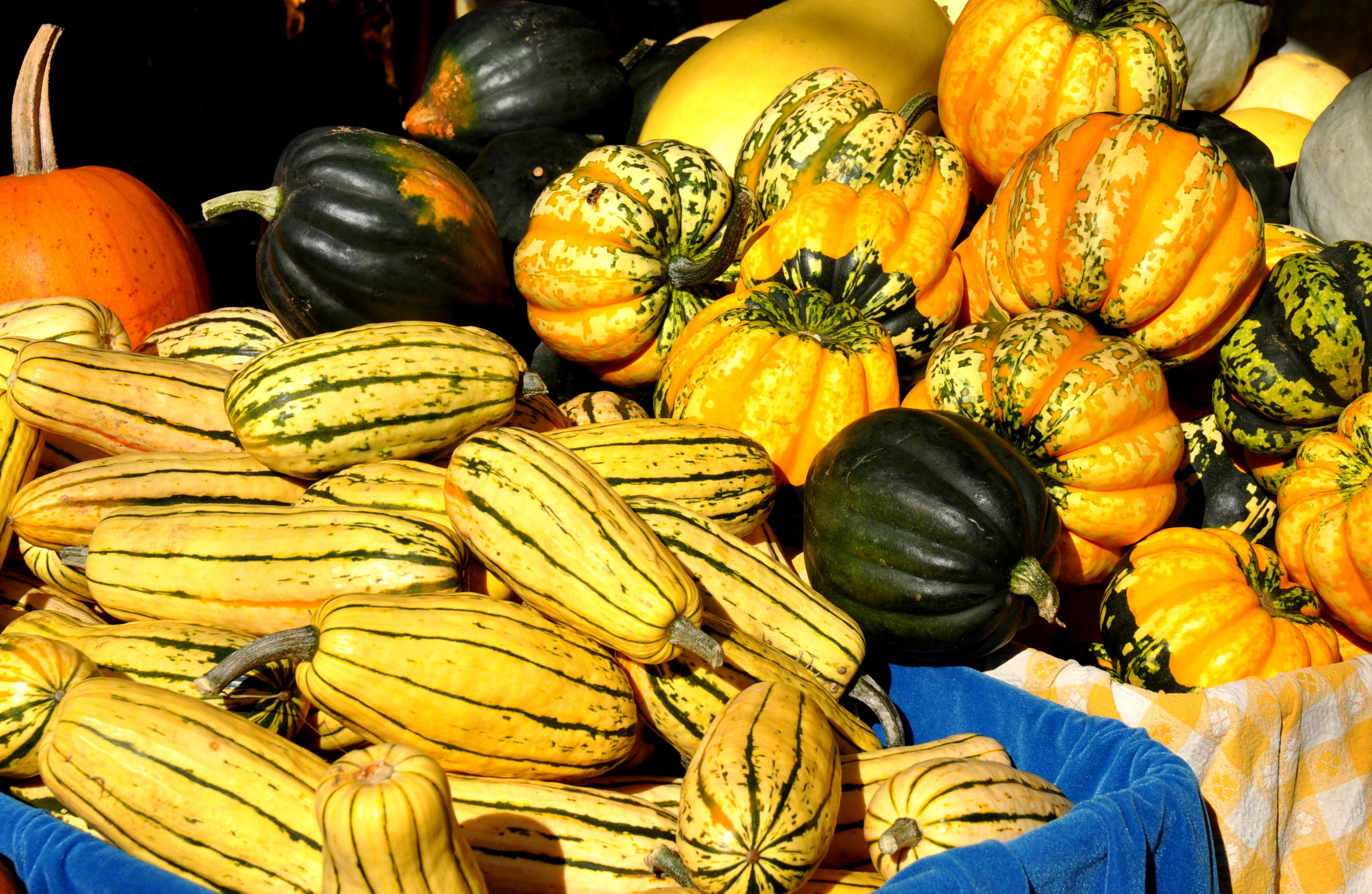 Winter squash from Colinwood Farms. Photo copyright 2013 by Zachary D. Lyons.