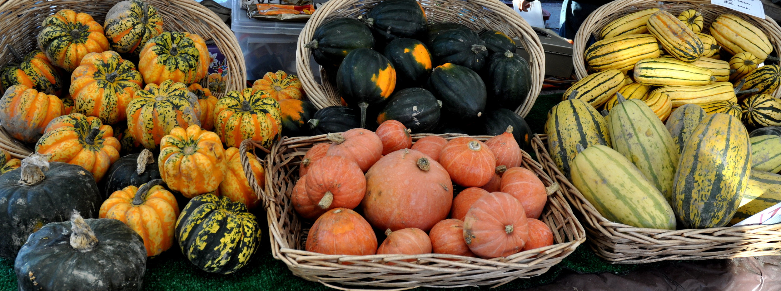 Winter squash from Alm Hill Gardens. Photo copyright 2013 by Zachary D. Lyons.