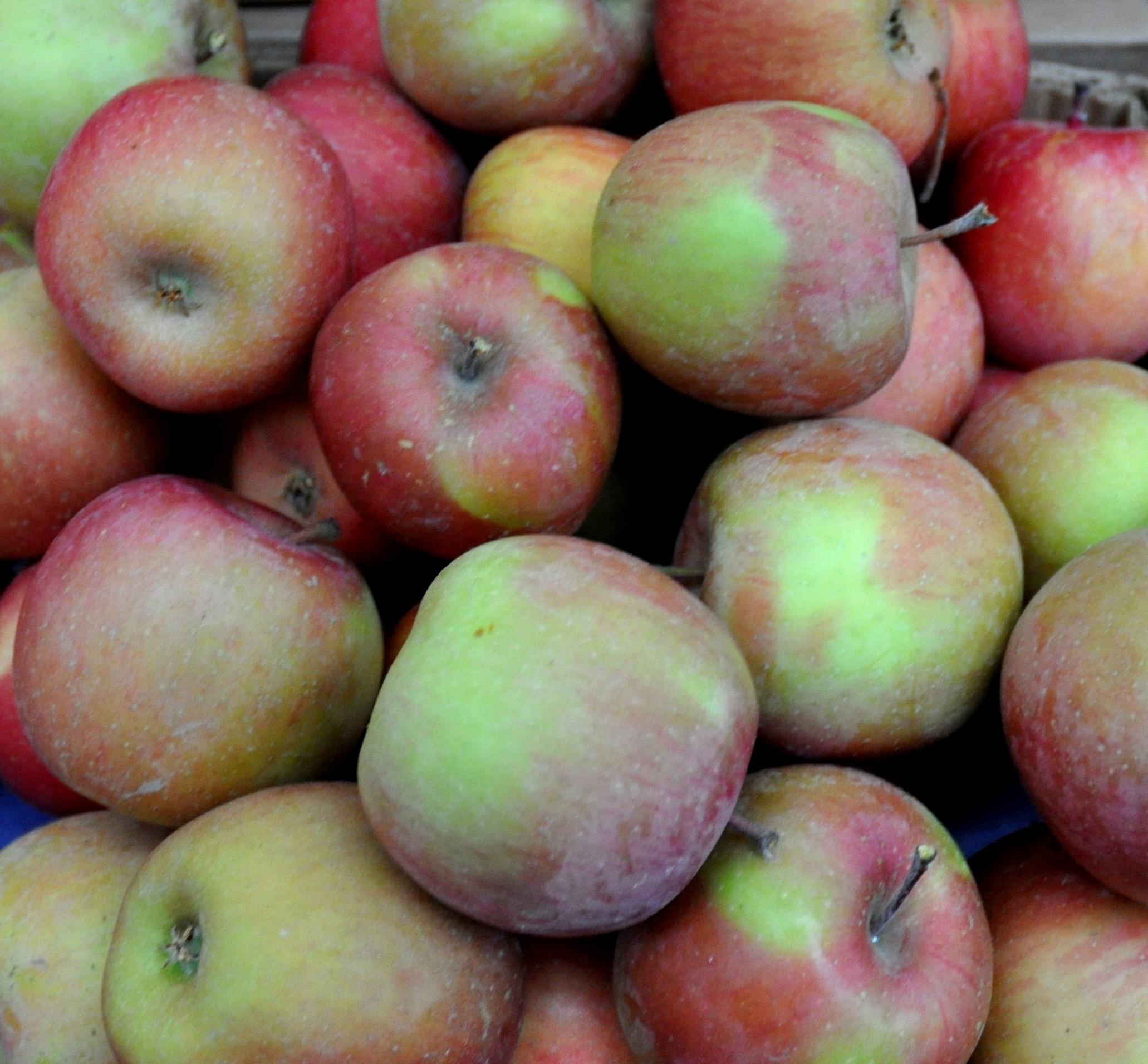 Mt. Fuji apples from Tiny's Organic Produce. Photo copyright 2013 by Zachary D. Lyons.