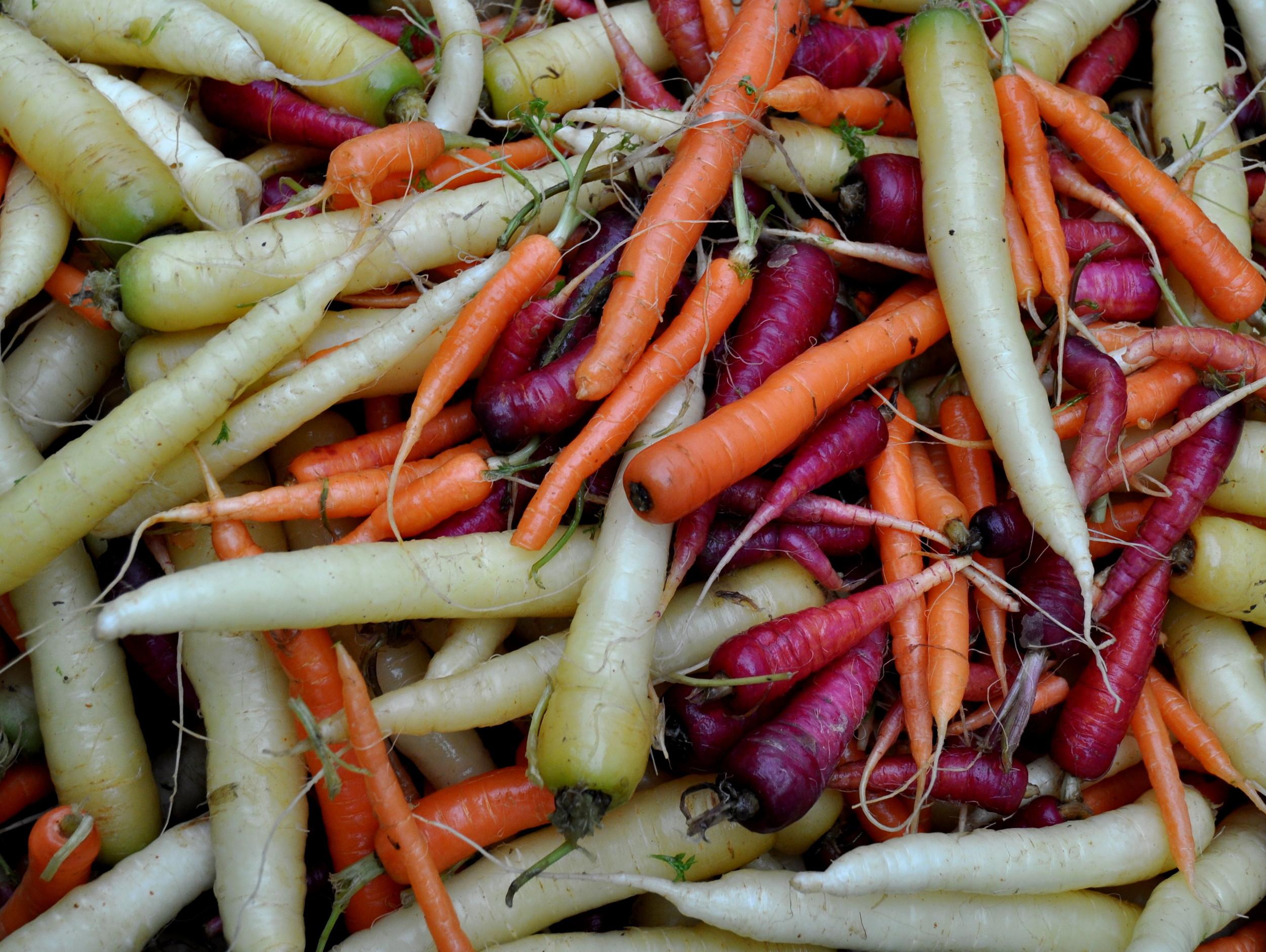 Rainbow carrots from Gaia's Harmony Farm. Photo copyright 2014 by Zachary D. Lyons.