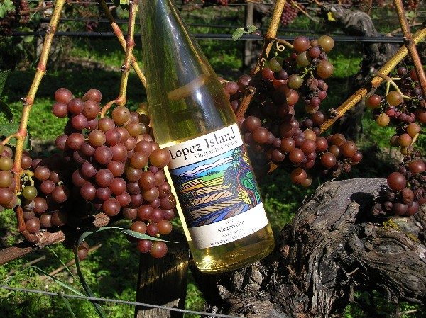 Siegerrebe from Lopez Island Vineyards. Photo courtesy Lopez Island Vineyards.