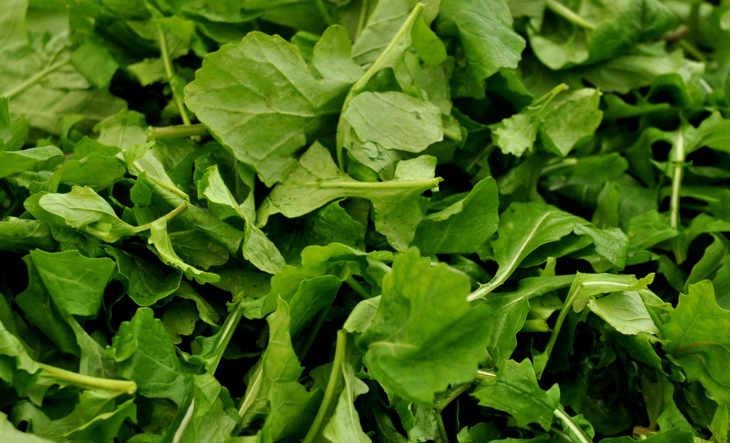 Arugula from Colinwood Farm. Photo copyright 2014 by Zachary D. Lyons.