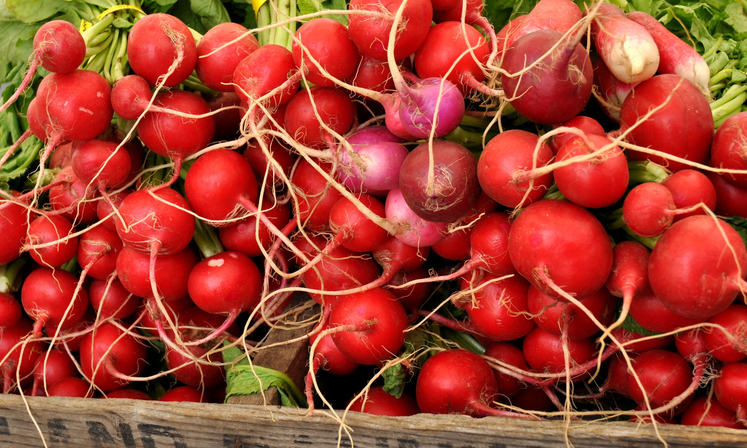 Radishes from Alm Hill Gardens. Photo copyright 2014 by Zachary D. Lyons.