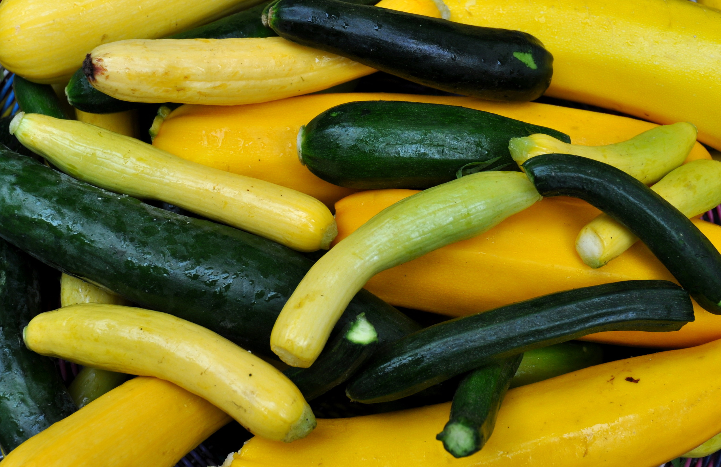 Zucchini from Colinwood Farm. Photo copyright 2014 by Zachary D. Lyons.