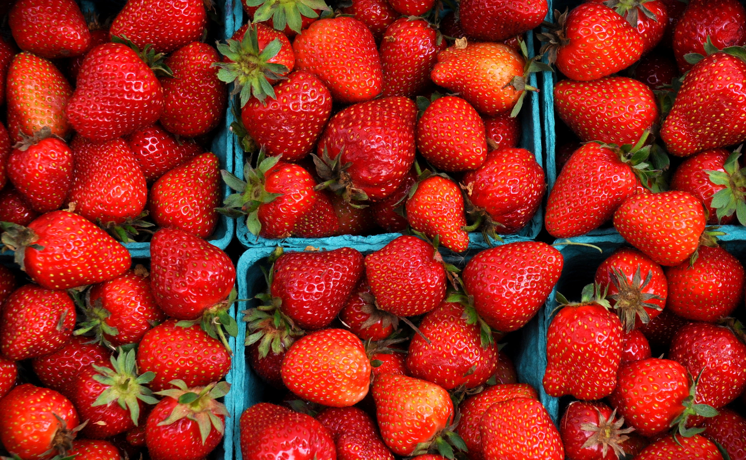Organic strawberries from Gaia's Harmony Farm. Photo copyright 2014 by Zachary D. Lyons.