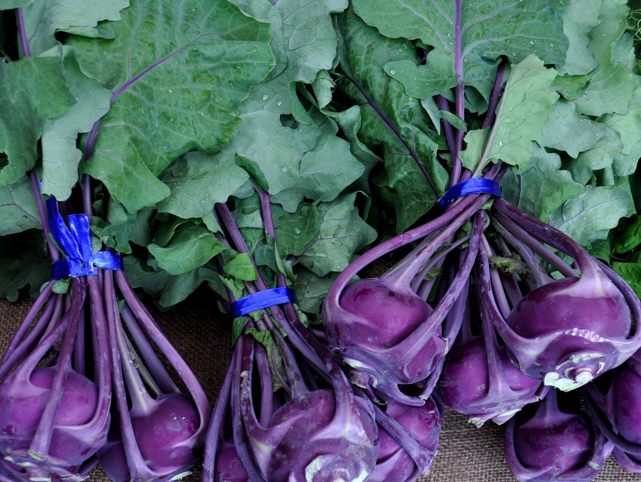 Purple kohlrabi from One Leaf Farm. Photo copyright 2014 by Zachary D. Lyons.