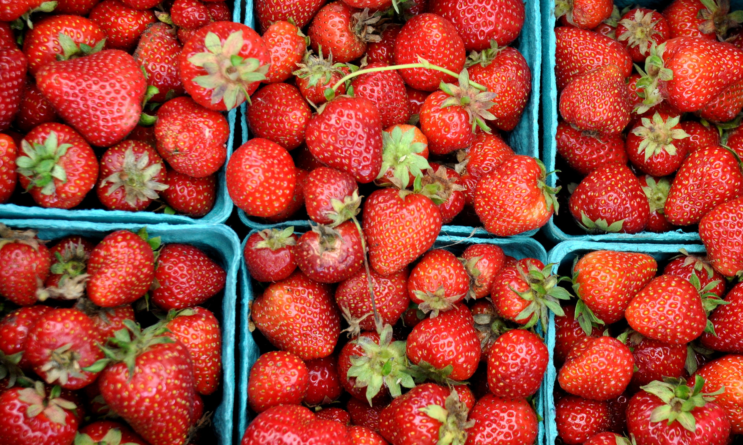 Organic strawberries from Stoney Plains Organic Farm. Photo copyright 2014 by Zachary D. Lyons.