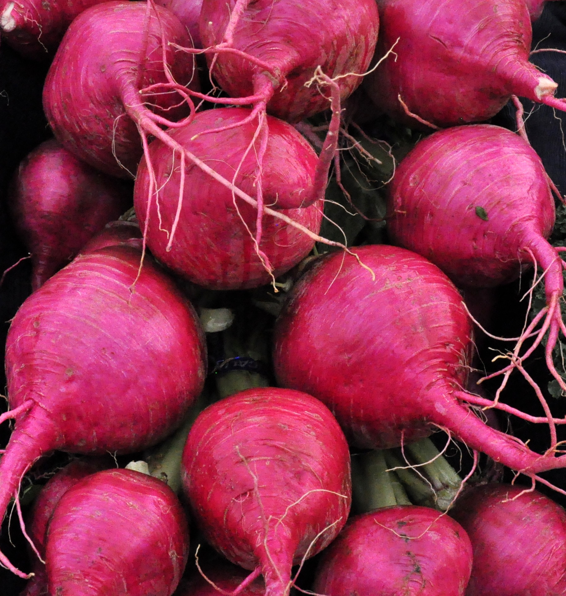 Pink turnips from Boistfort Valley Farm. Photo copyright 2014 by Zachary D. Lyons.
