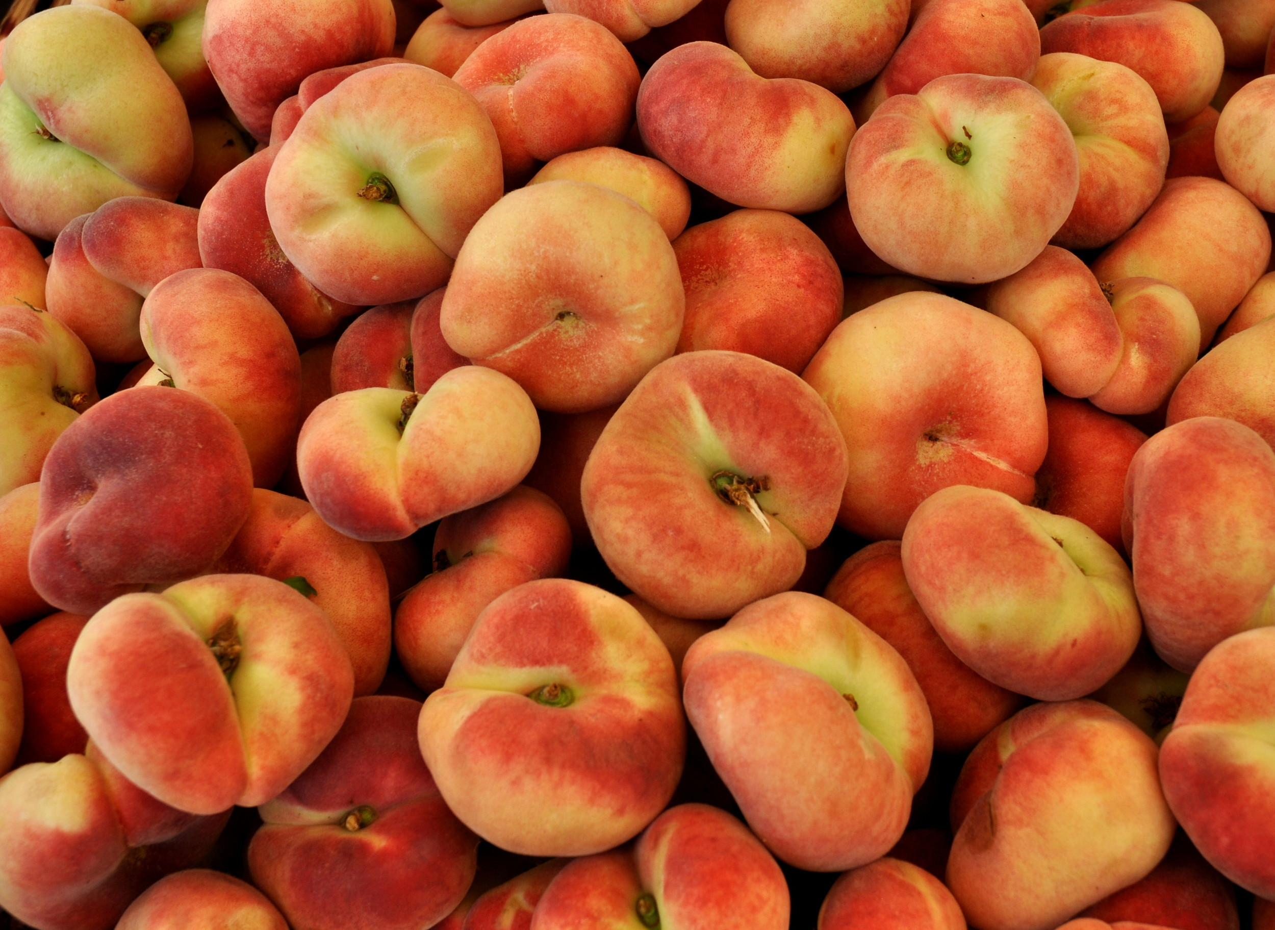 Donut peaches from Collins Family Orchards. Photo copyright 2014 by Zachary D. Lyons.