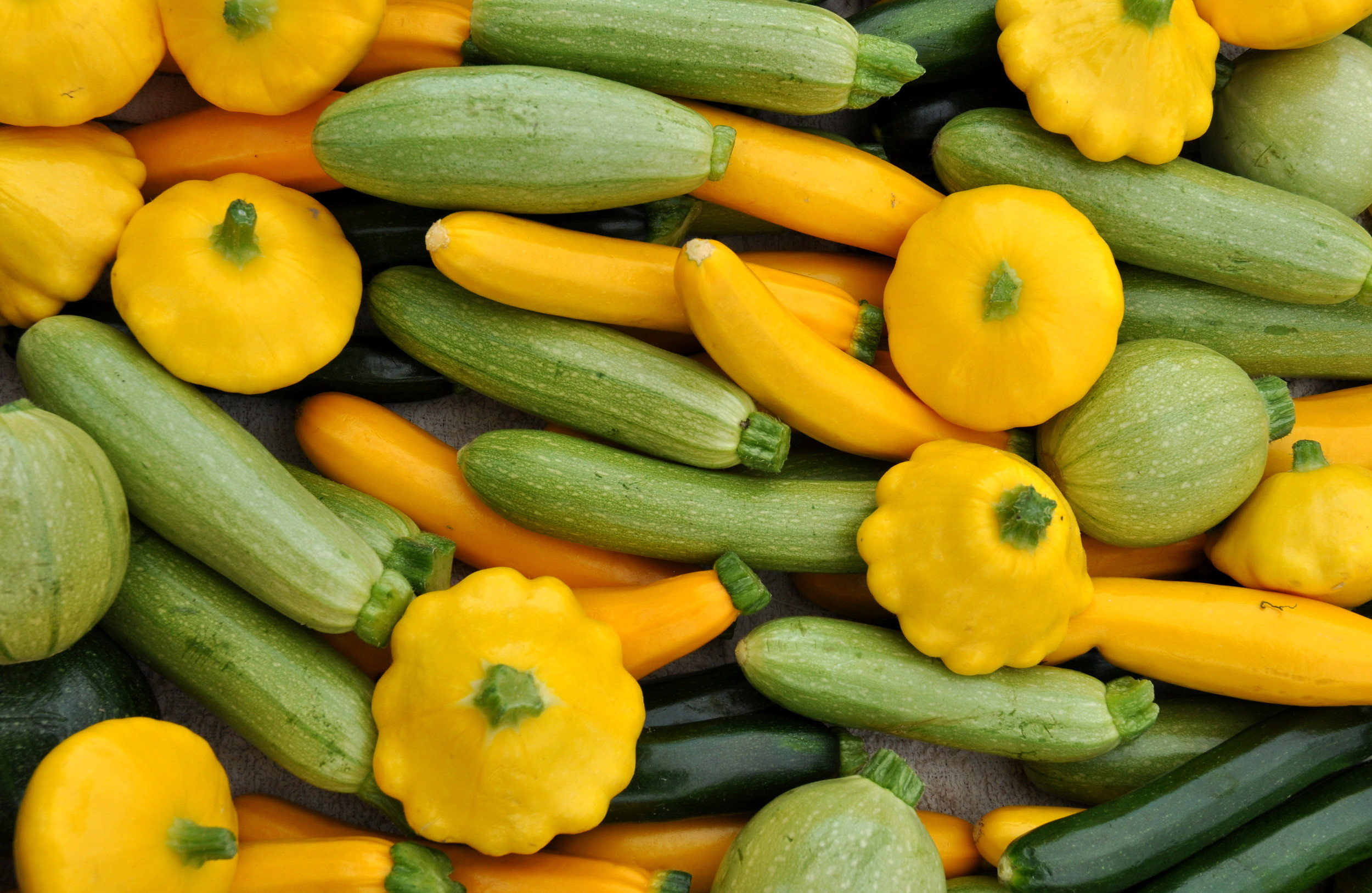Baby summer squash from Growing Things Farm. Photo copyright 2014 by Zachary D. Lyons.