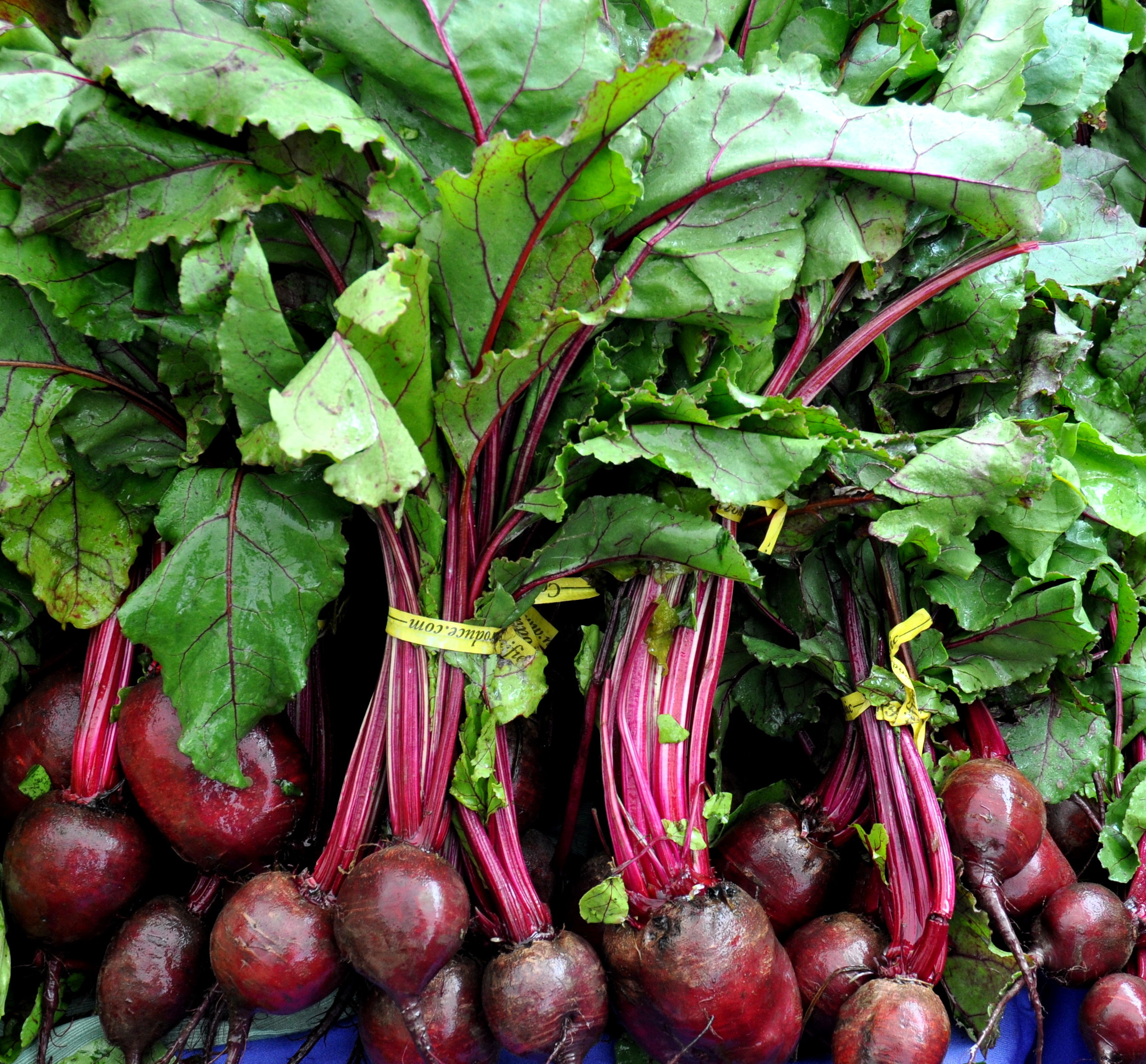 Detroit beets from Nash's Organic Farm. Photo copyright 2014 by Zachary D. Lyons.