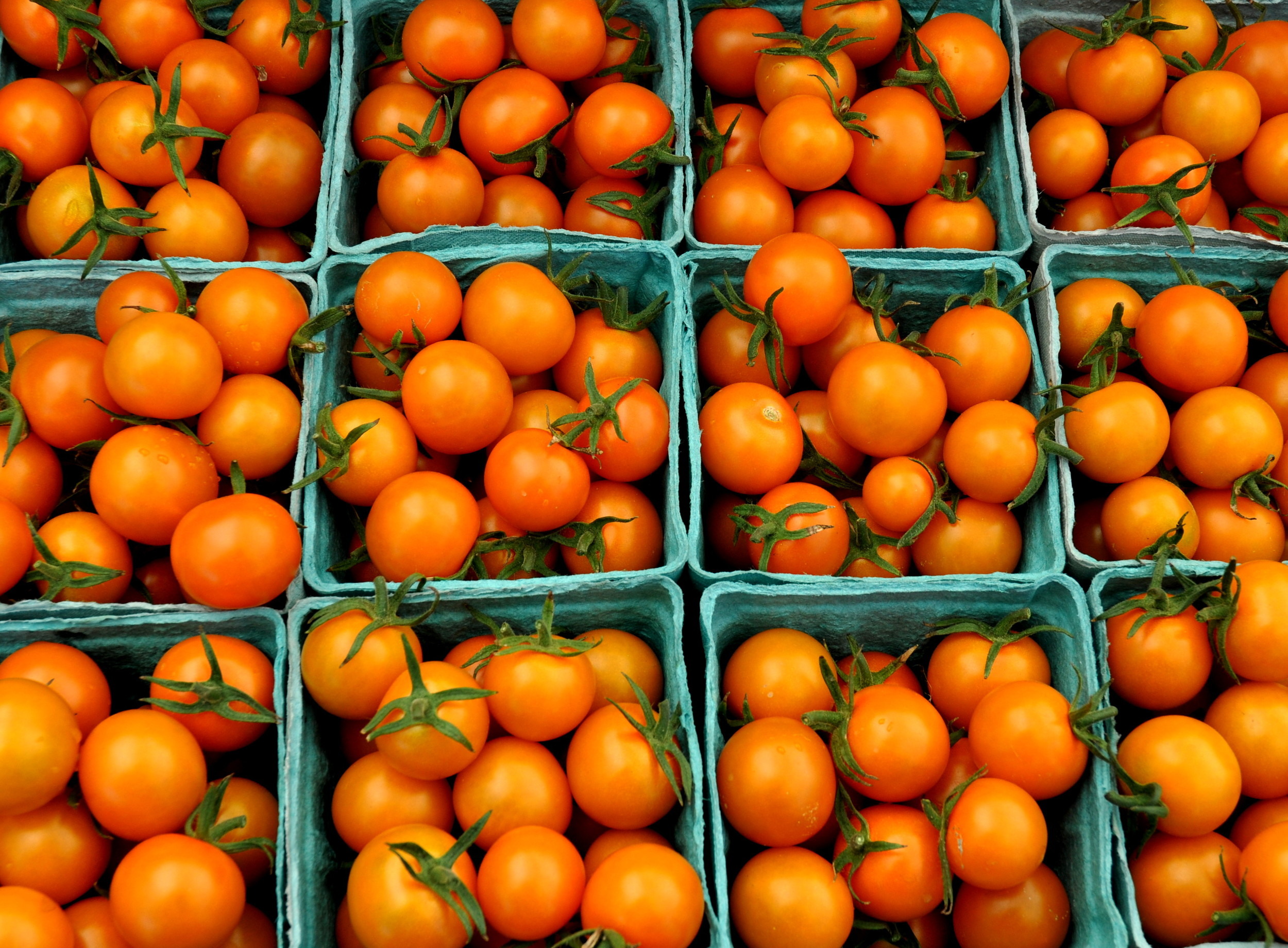 Sungold cherry tomatoes from One Leaf Farm. Photo copyright 2014 by Zachary D. Lyons.
