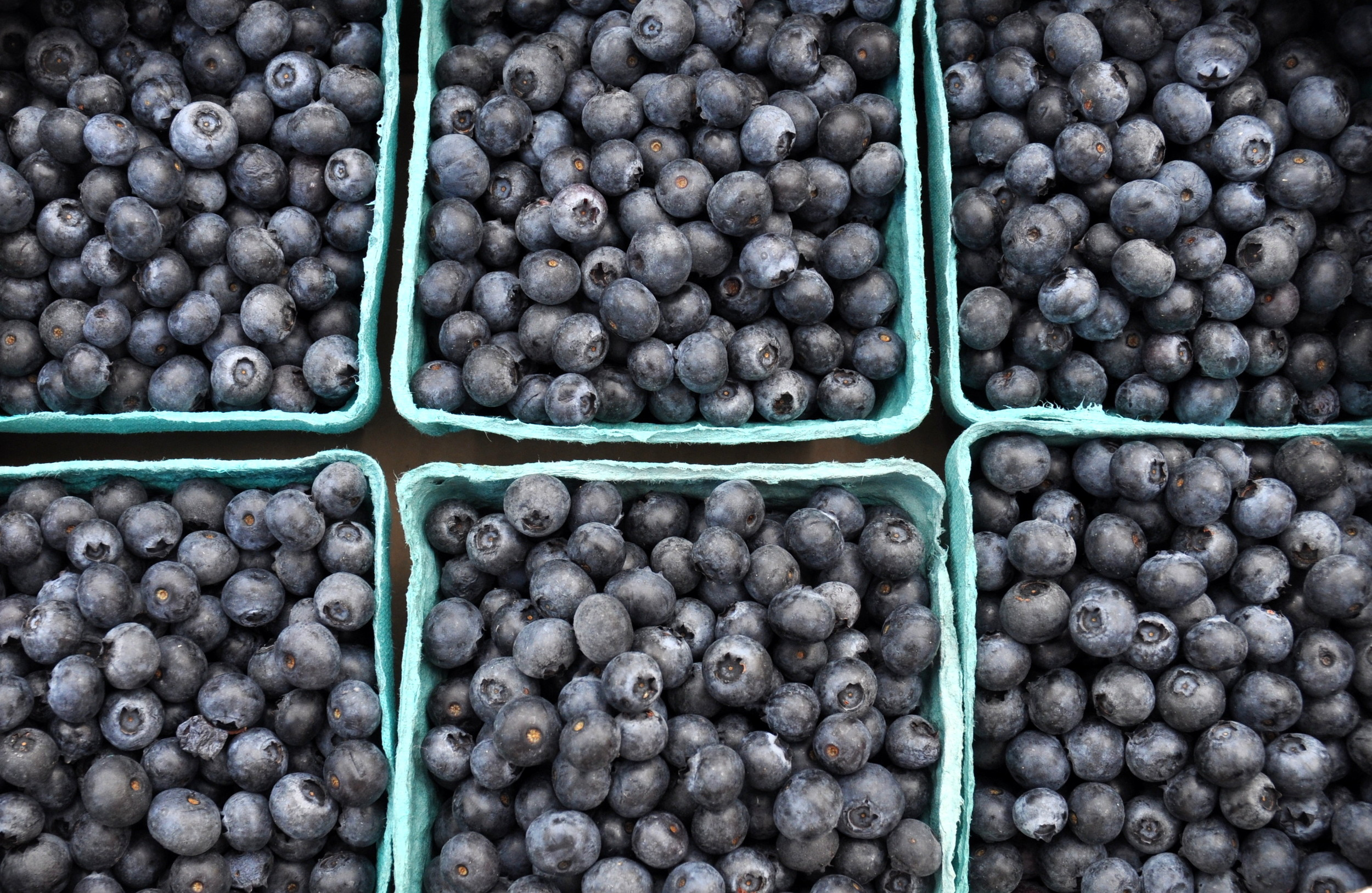 Rubels blueberries from Whitehorse Meadows Organic Blueberry Farm. Photo copyright 2014 by Zachary D. Lyons.