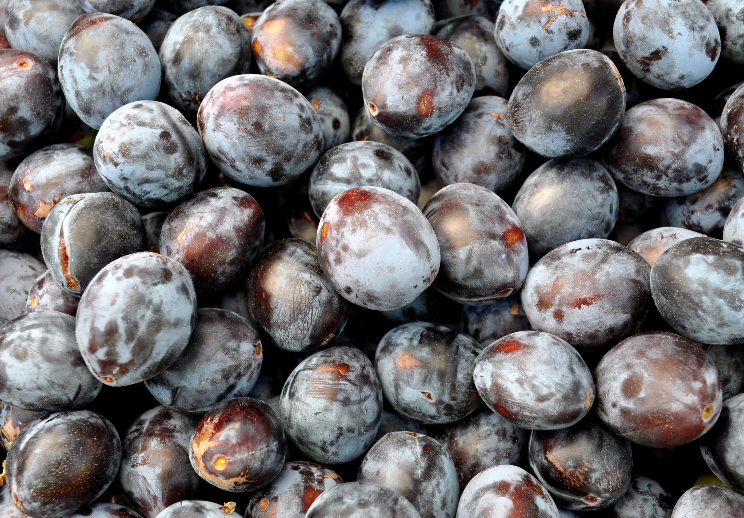 Italian prunes from Booth Canyon Orchard at Ballard Farmers Market. Copyright Zachary D. Lyons.