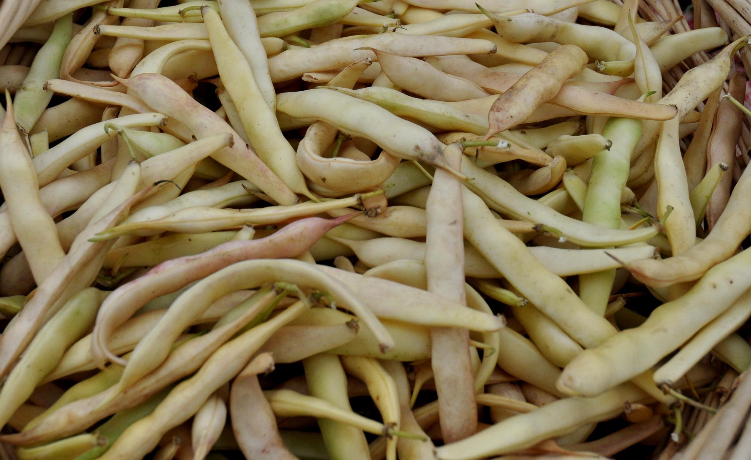 Fresh cannellini shelling beans from One Leaf Farm at Ballard Farmers Market. Copyright Zachary D. Lyons.