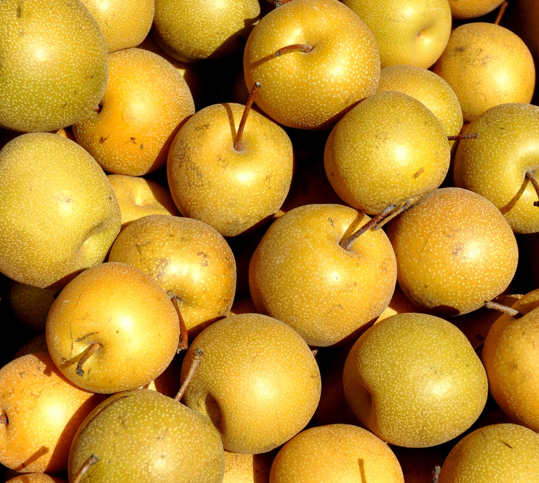 Asian pears from Tiny's Organic at Ballard Farmers Market. Copyright 2014 by Zachary D. Lyons.