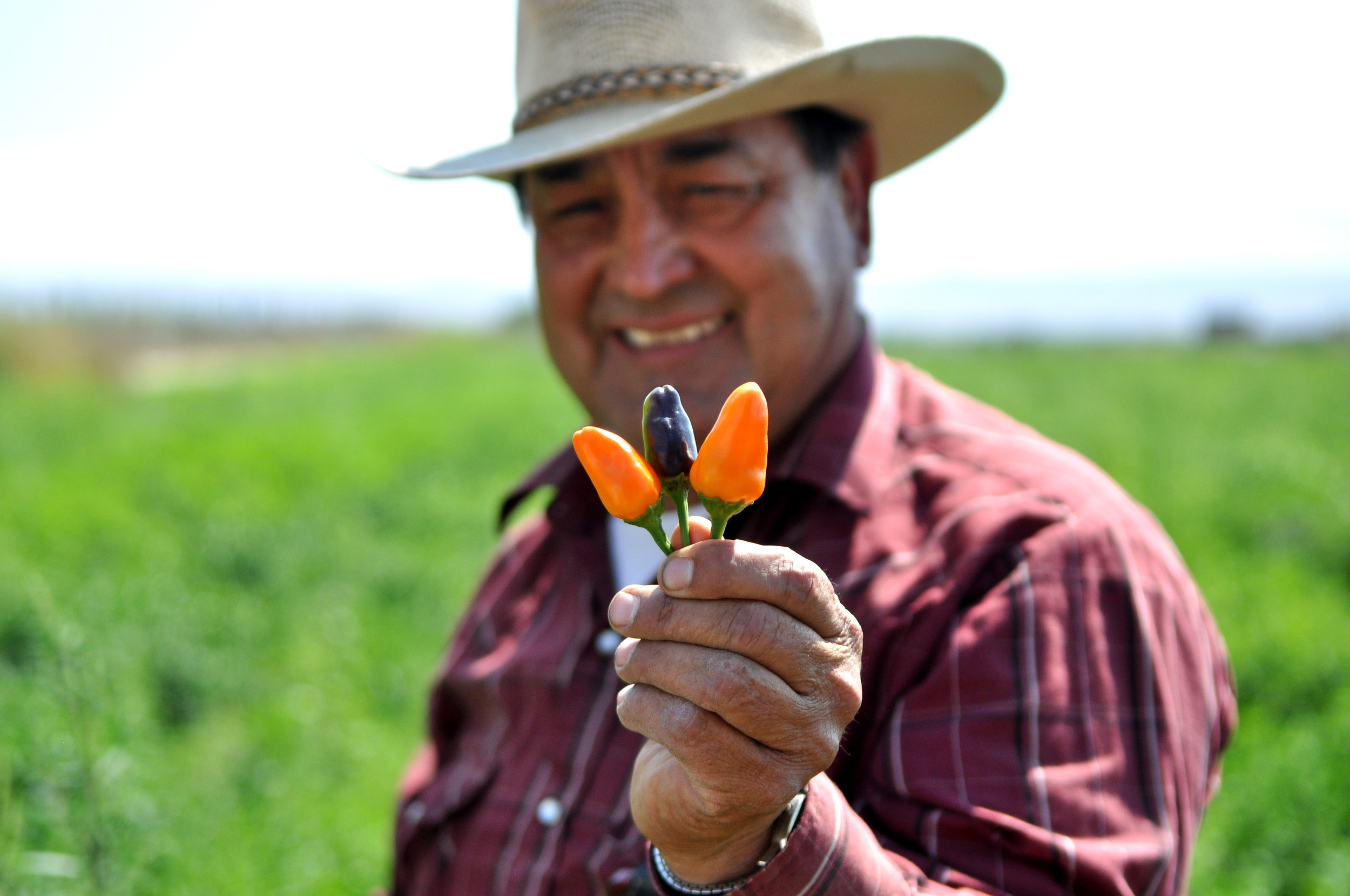 Don Hilario Alvarez holding hot chile peppers at Alvarez Organic Farms. Copyright Zachary D. Lyons.