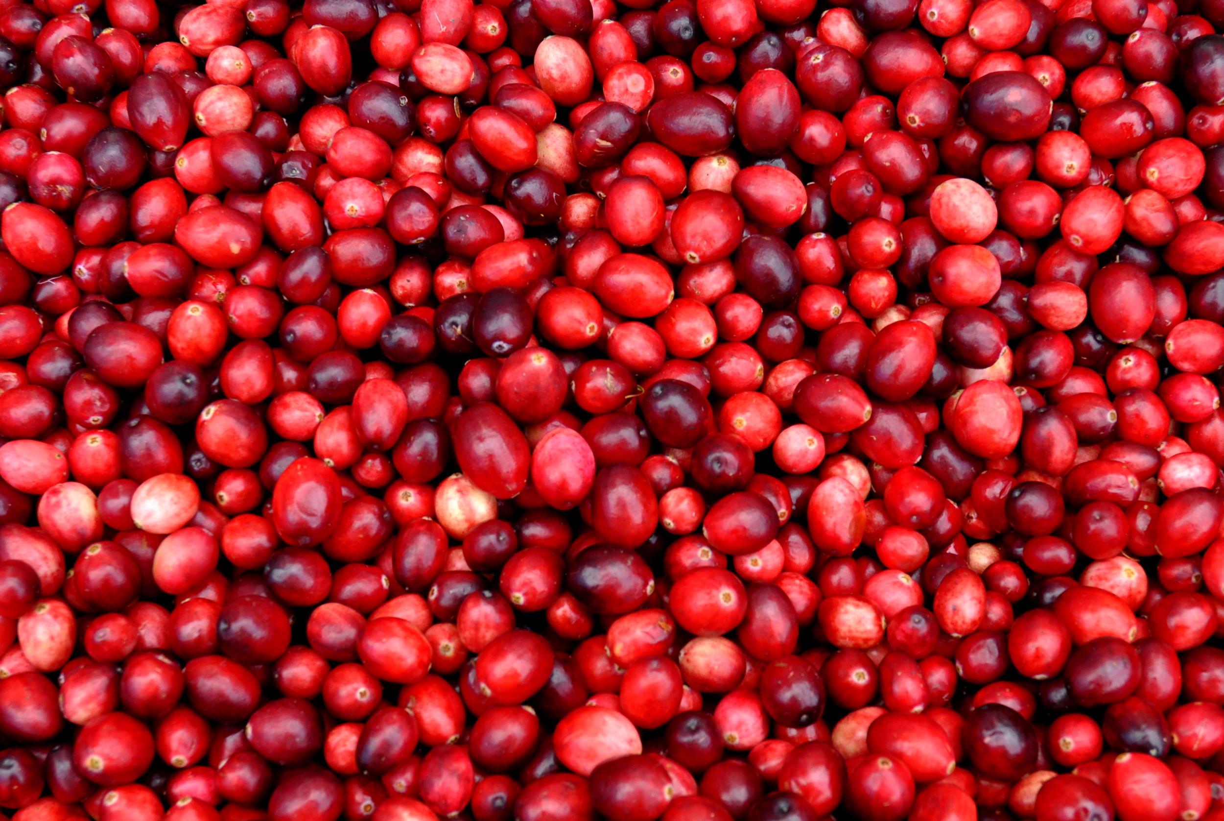 Fresh cranberries from Bloom Creek Farm at Ballard Farmers Market. Copyright 2014 by Zachary D. Lyons.
