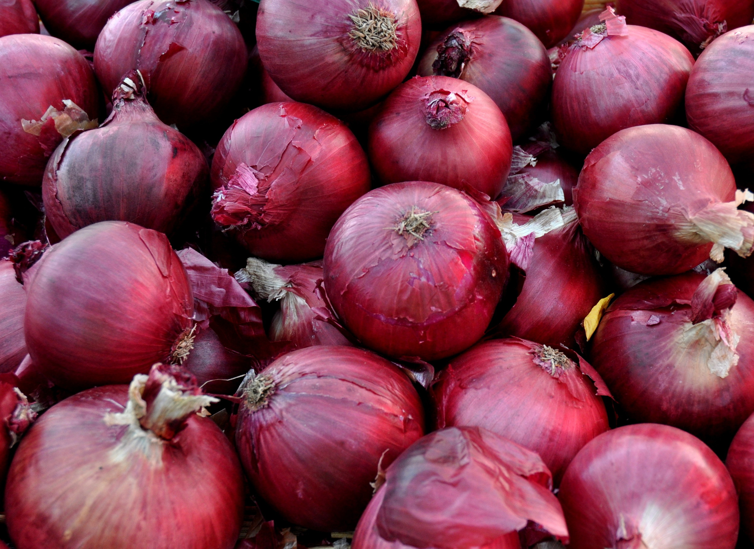 Red storage onions from Colinwood Farm at your Ballard Farmers Market. Copyright Zachary D. Lyons.