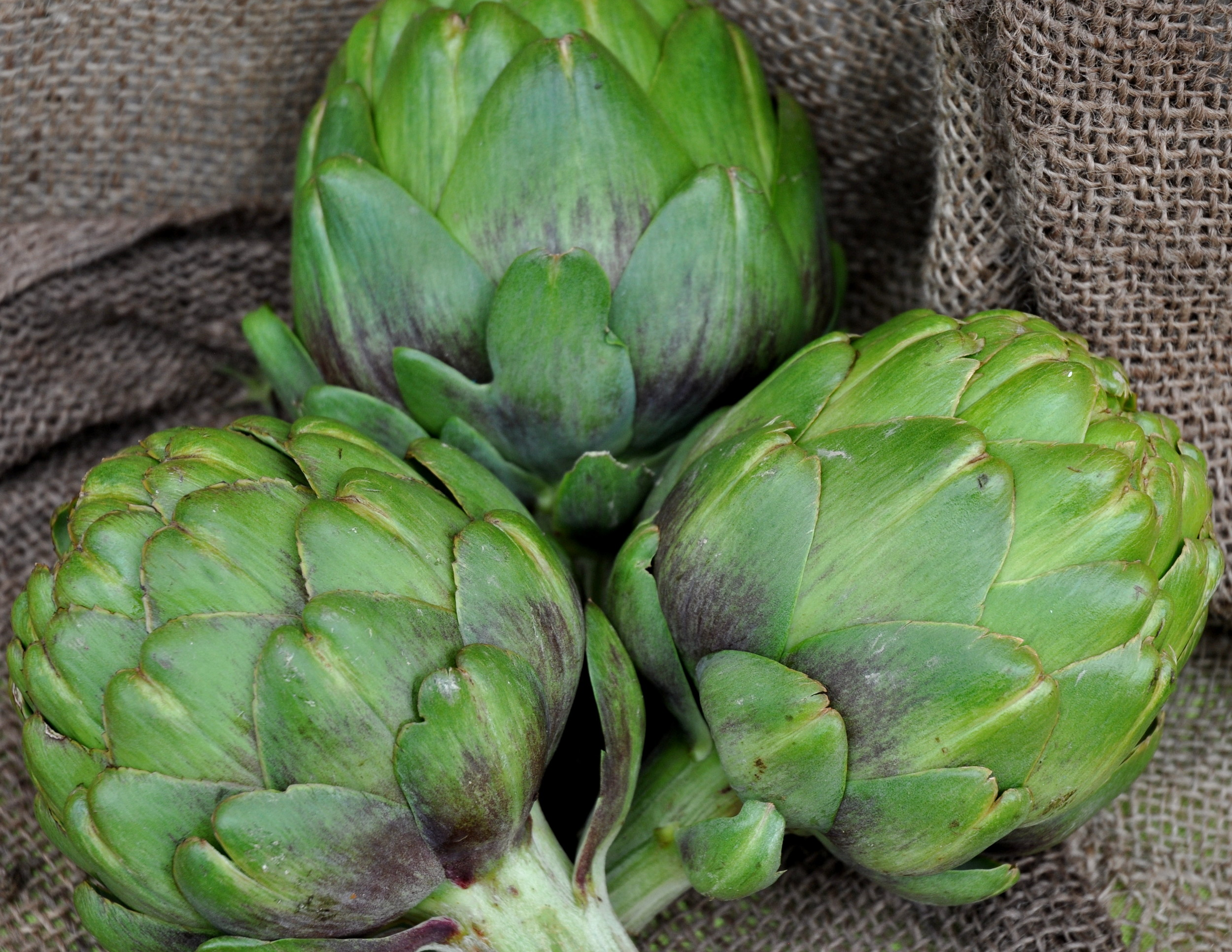 Artichokes from Growing Things Farm at Ballard Farmers Market. Copyright Zachary D. Lyons.