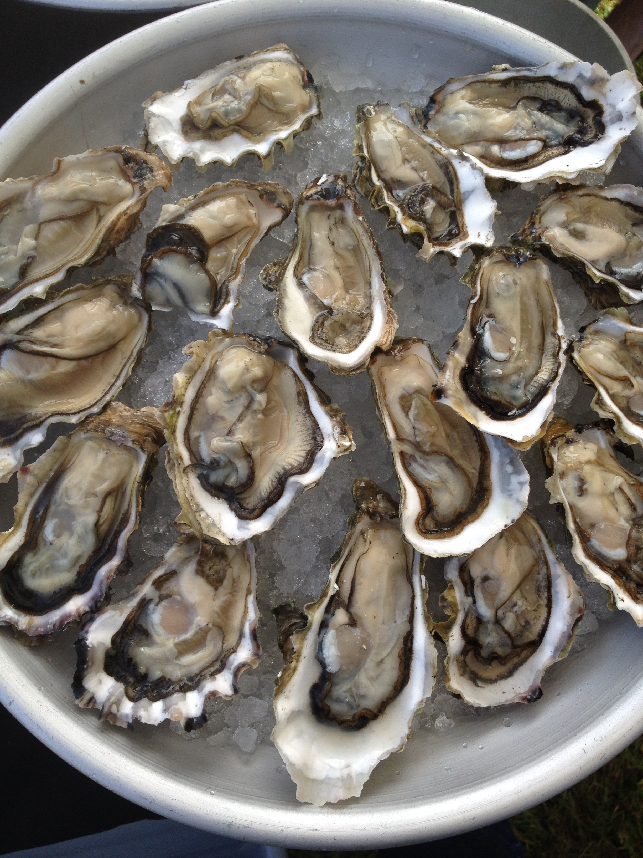 Freshly shucked oysters on the half shell from Hama Hama Oysters at Ballard Farmers Market. Copyright Lauren McCool.