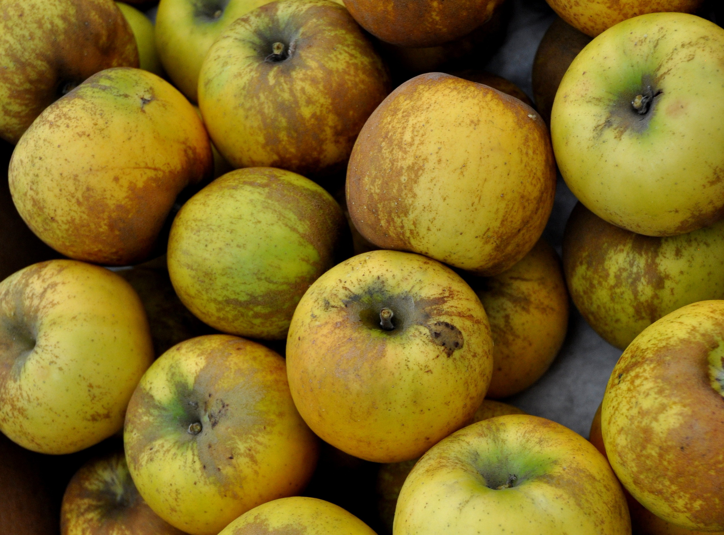 Golden Russet apples from Booth Canyon Orchard at Ballard Farmers Market. Copyright Zachary D. Lyons.