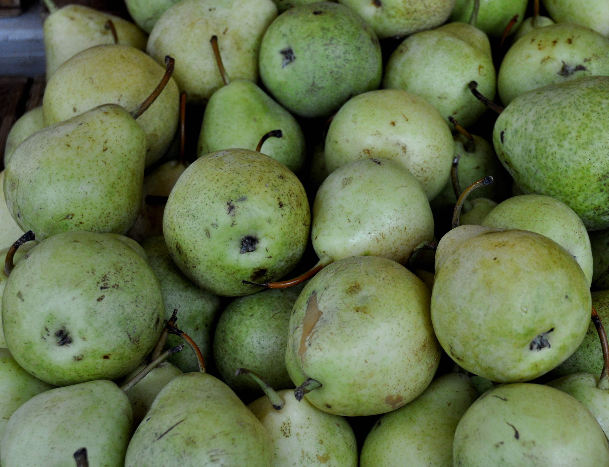 Crispy pears from Collins Family Orchards at Ballard Farmers Market. Copyright Zachary D. Lyons.