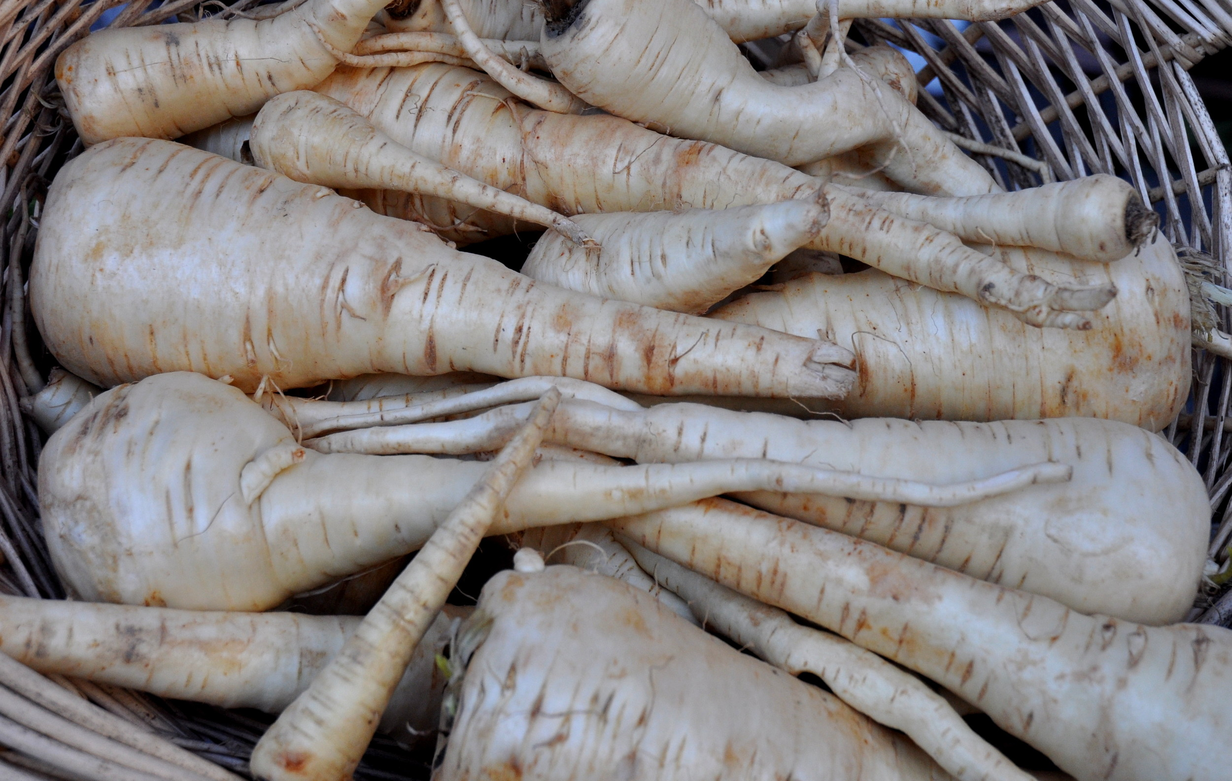 Parsnips from Oxbow Farm at Ballard Farmers Market. Copyright Zachary D. Lyons.