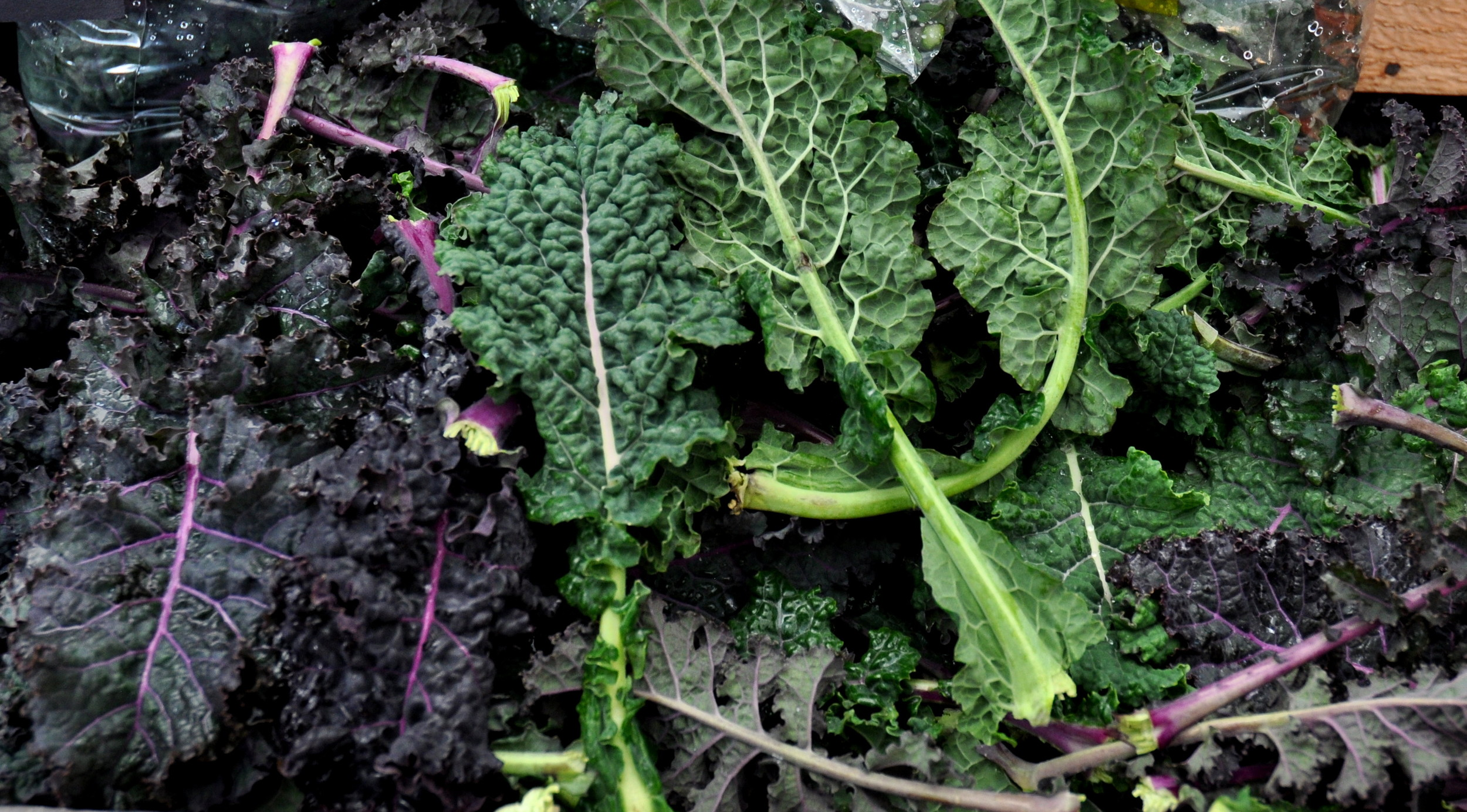 Kale from Kirsop Farm at Ballard Farmers Market. Copyright Zachary D. Lyons.