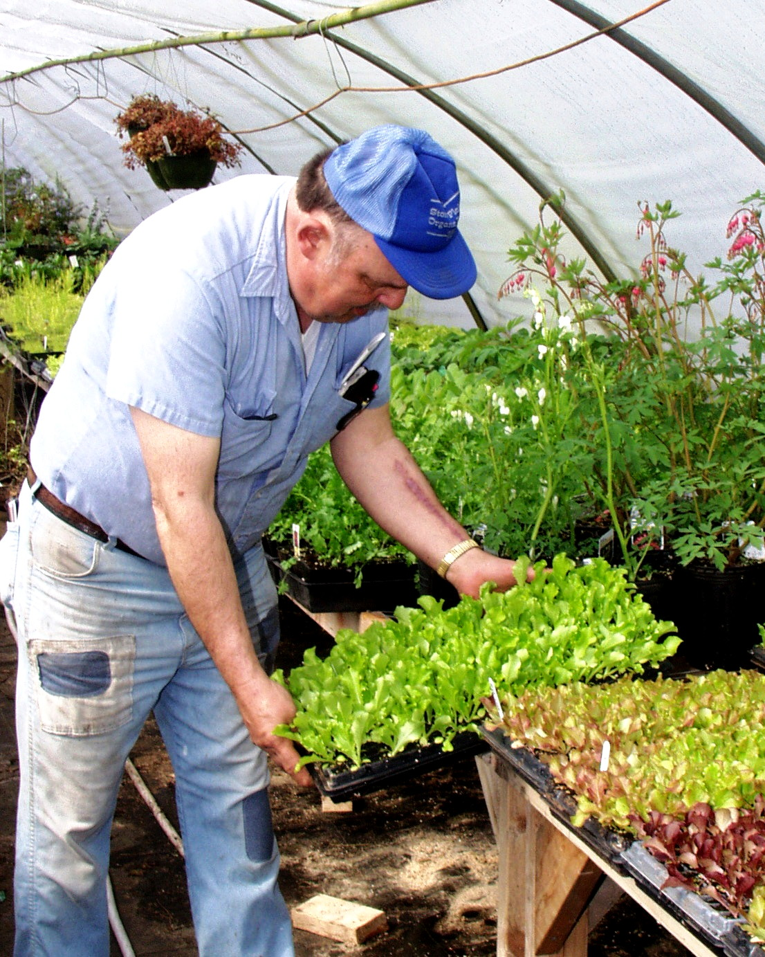 Bob Meyer working in the greenhouse at Stoney Plains Organic Farm. Photo courtesy Stoney Plains Organic Farm.