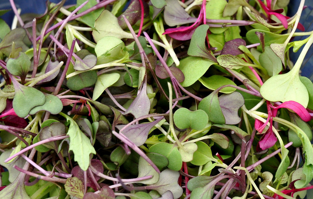 Microgreens from Kirsop Farm. Photo credit: Zachary D Lyons