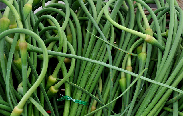 Garlic scapes. Photo credit: Zachary D Lyons.