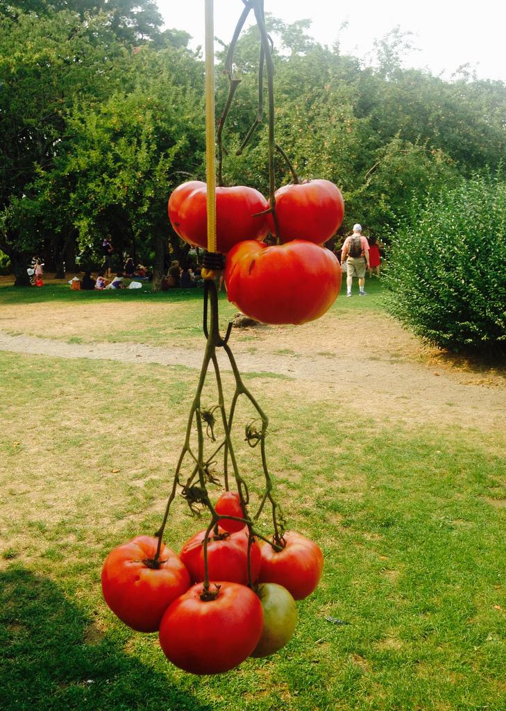 Tomato mobile artwork from Gaia's Harmony Farm.