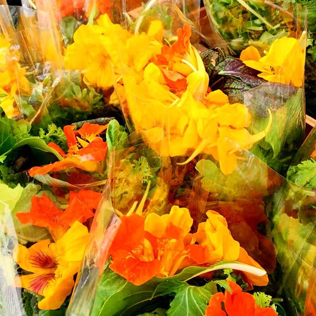 FLOWER POWER FRIDAY! Edible flowers in fresh salad mix are what spring is all about! Try these delicate blossoms dressed with a bright champagne vinaigrette. Visit SpringRain Farm & Orchard to find a bag to take home.
