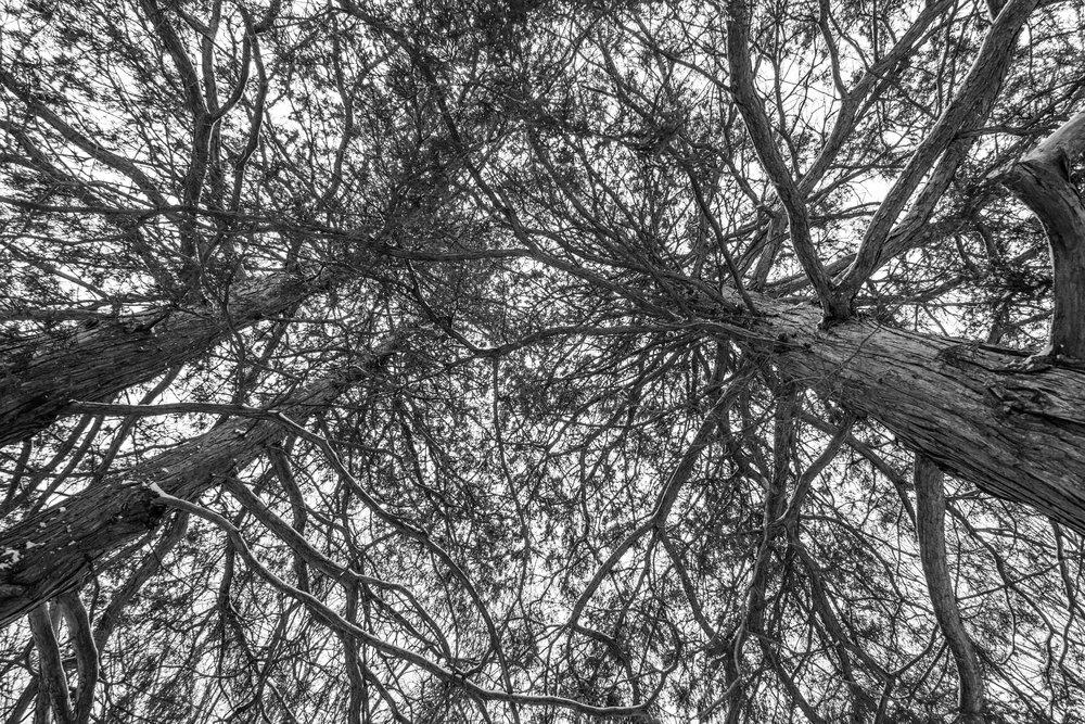 wintertrees.jpg