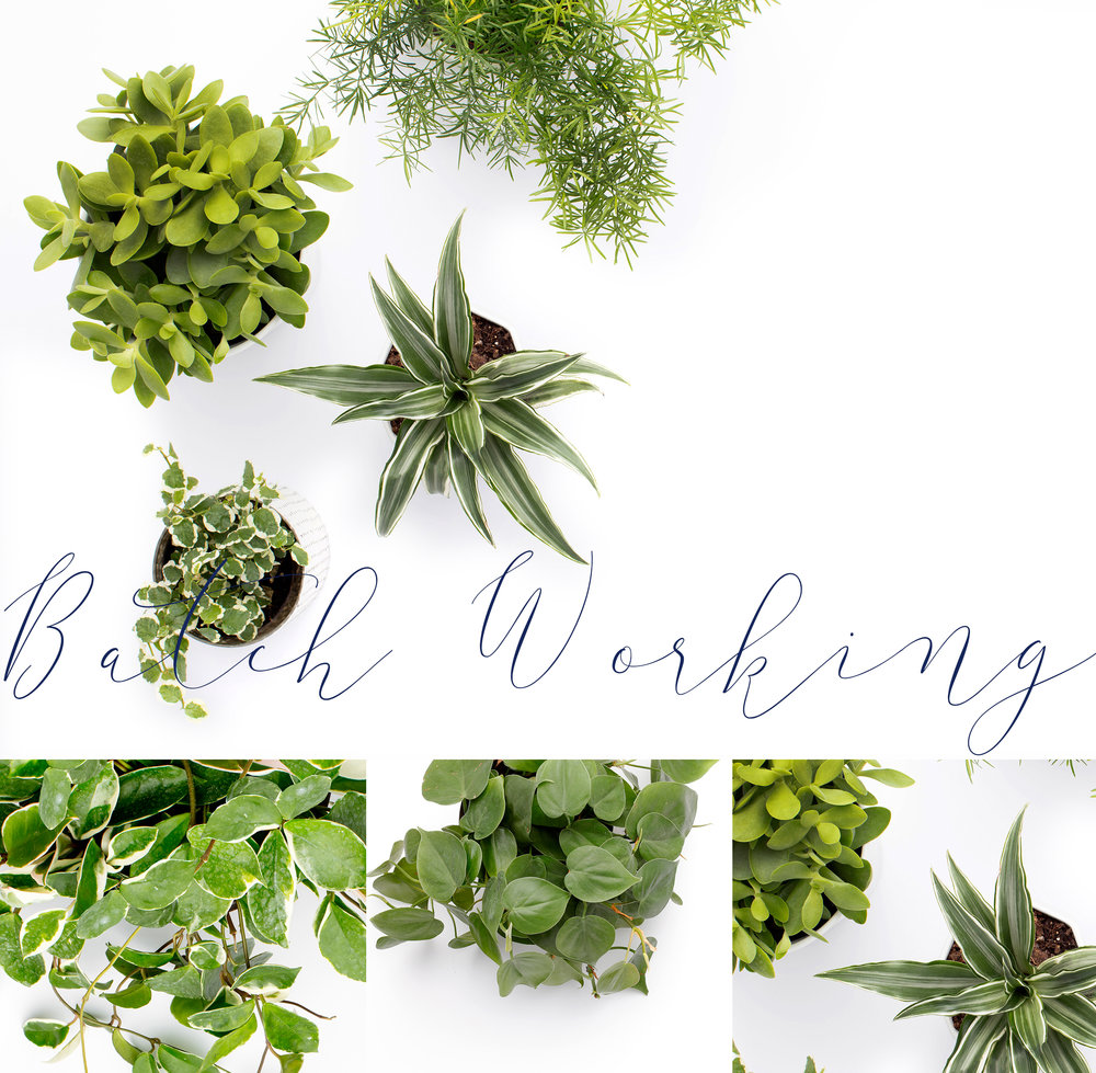 """green plants on white background with title """"batch working"""""""